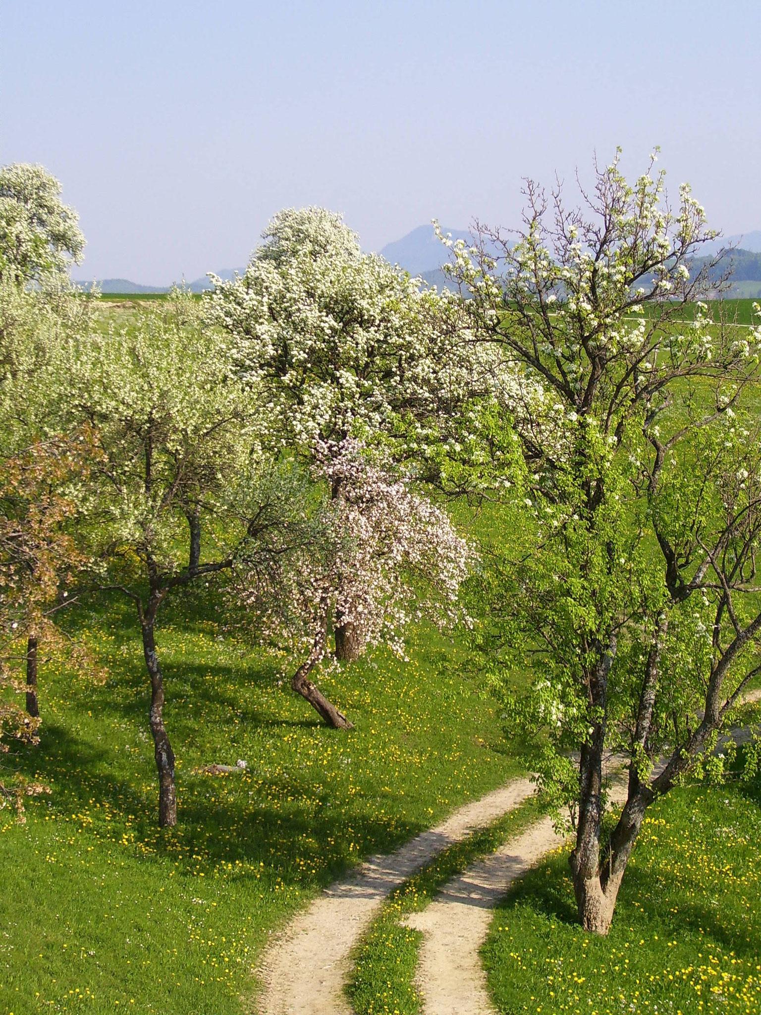 Frühling im Baumgarten
