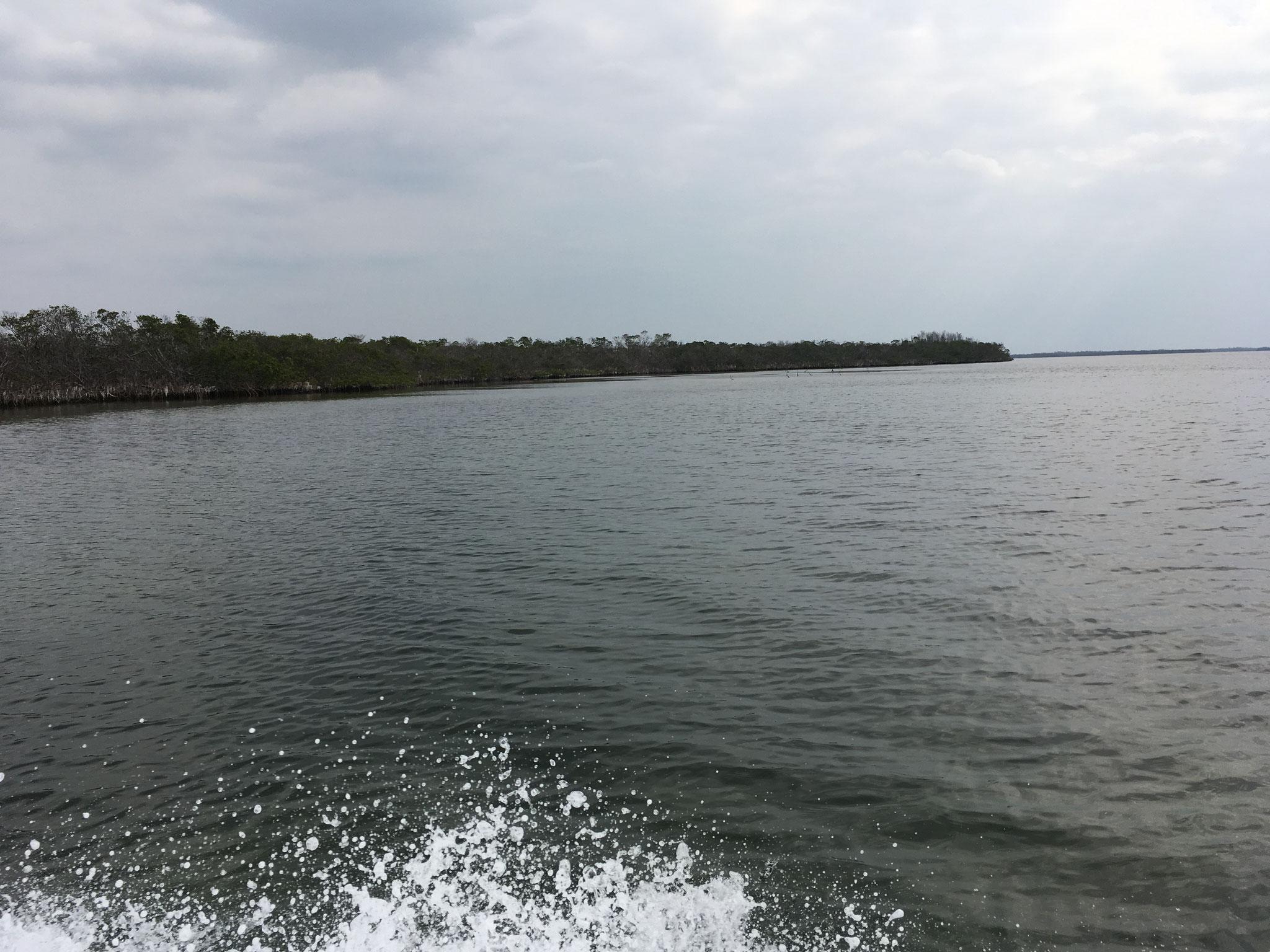 Sortie mangrove,  Cayo Santa Maria, Cuba