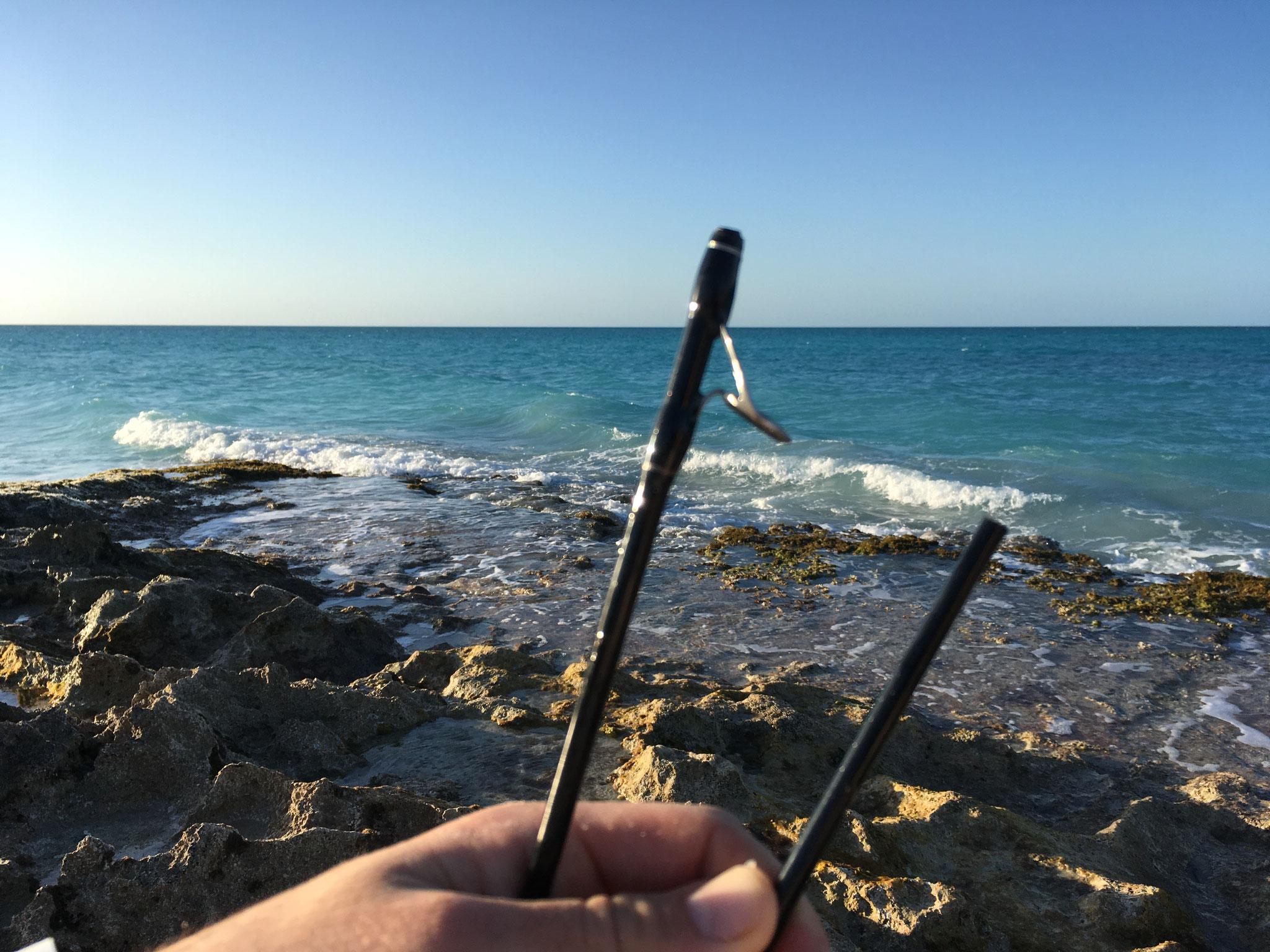 Canne cassée, Cayo Santa Maria, Cuba