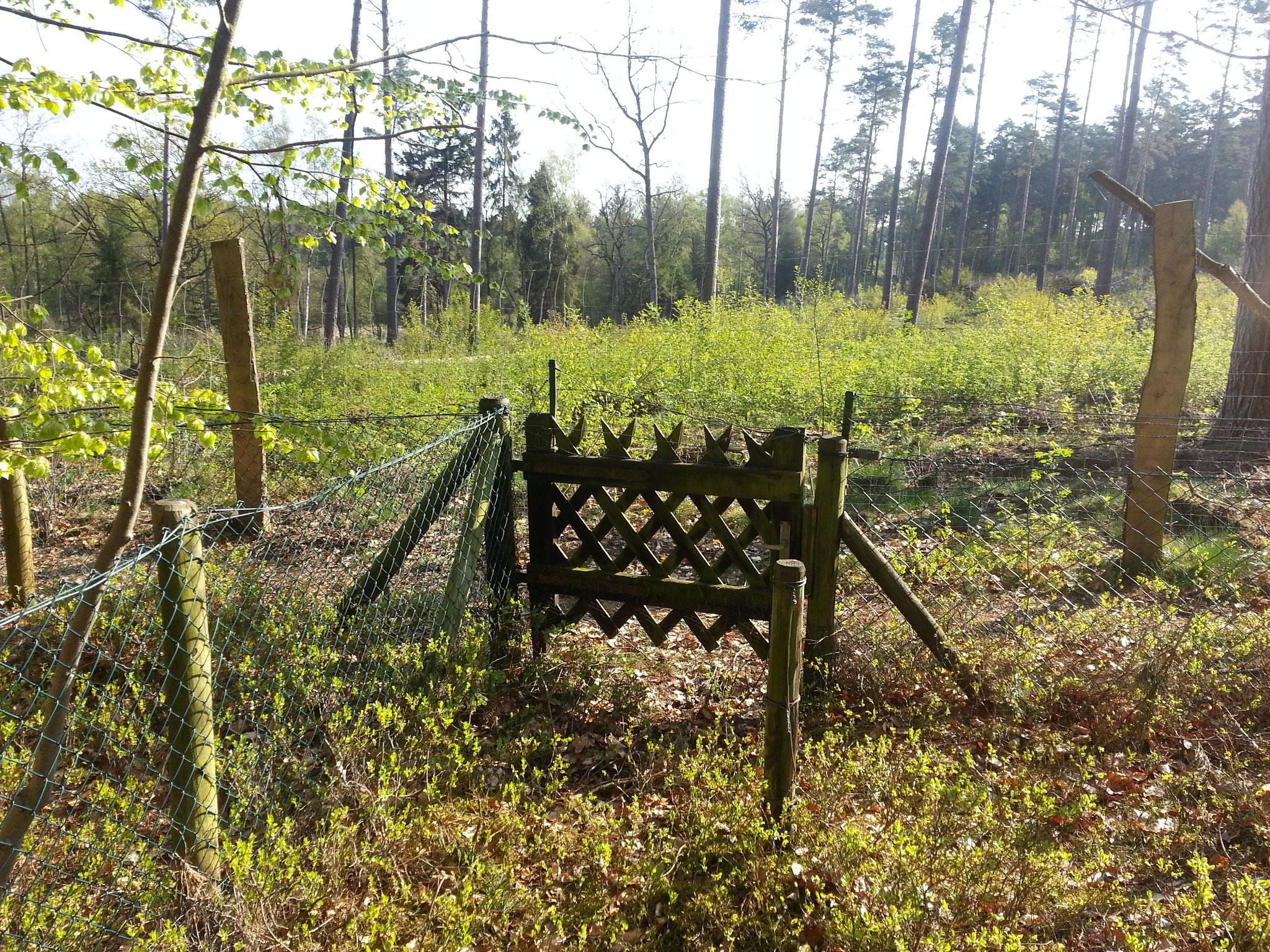 Das kleine Tor hinten führt zur Schonung, die heute schon hoch zugewuchert ist, und weiter in den Wald.