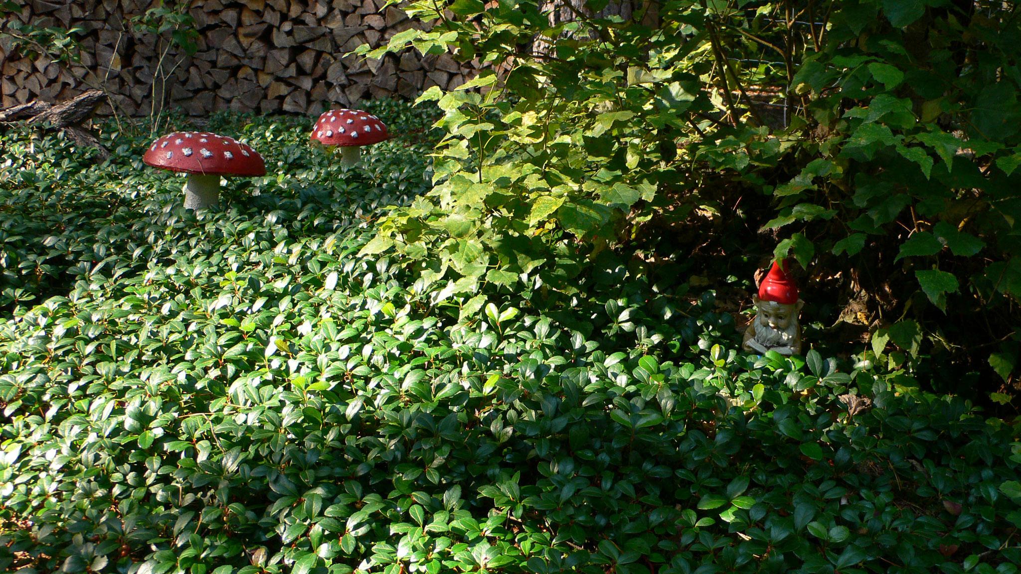 """Im """"Hinterhof"""" das glückbringende Zwergenschutzgebiet ..."""