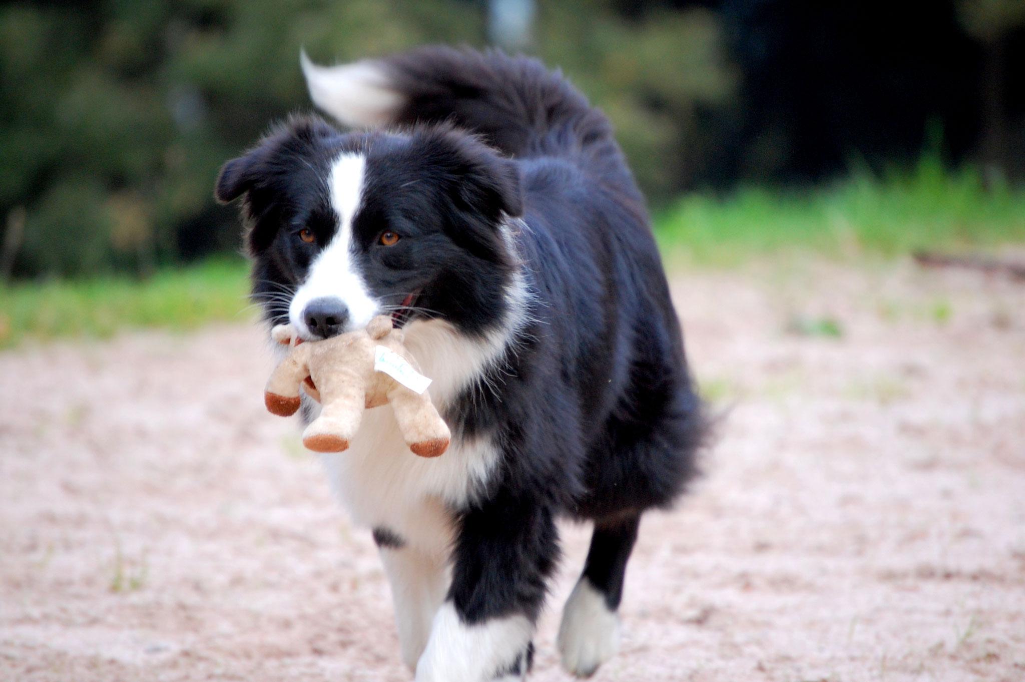 Therapie Hund Ergotherapie