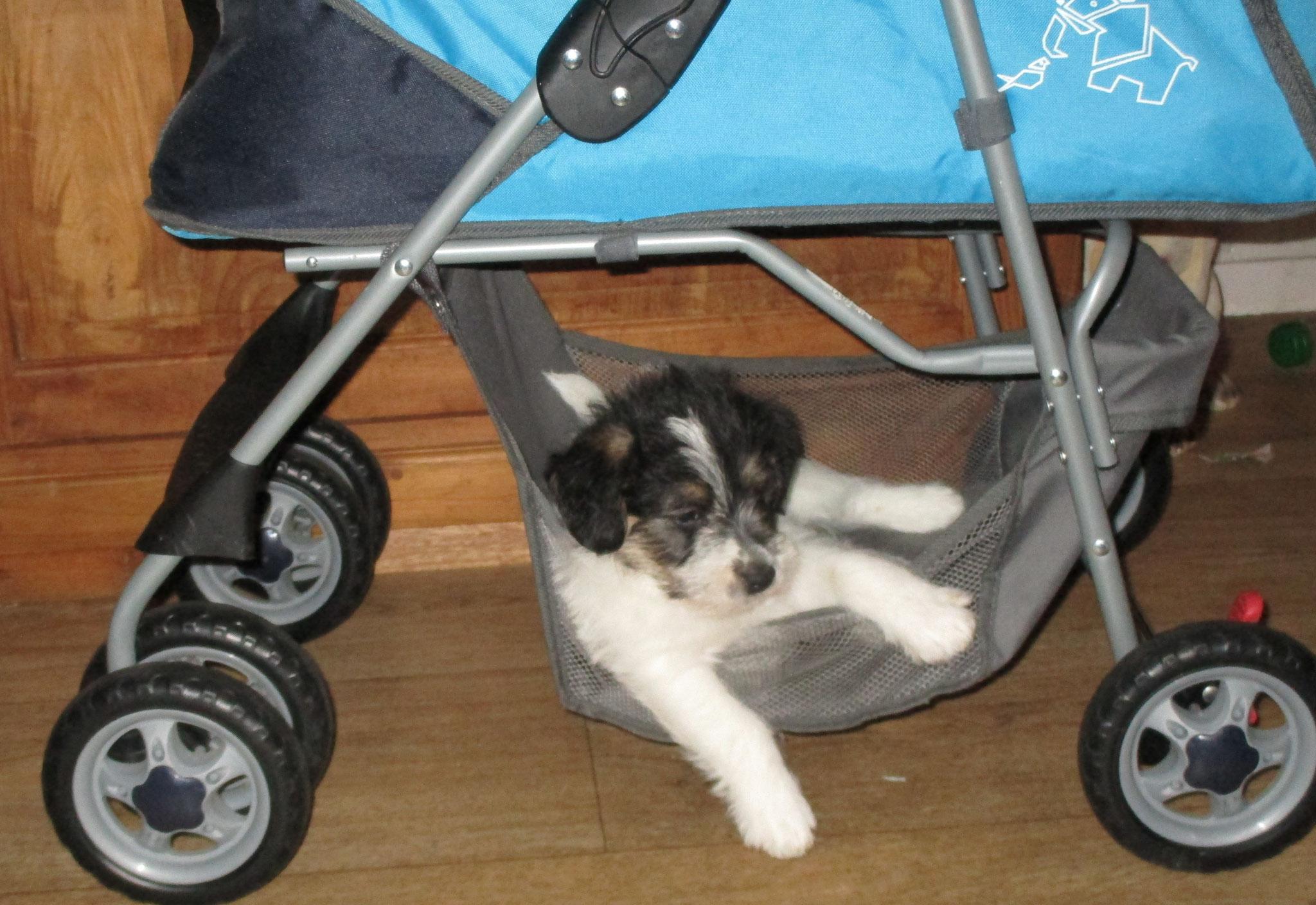 Hangmat voor de hondjes