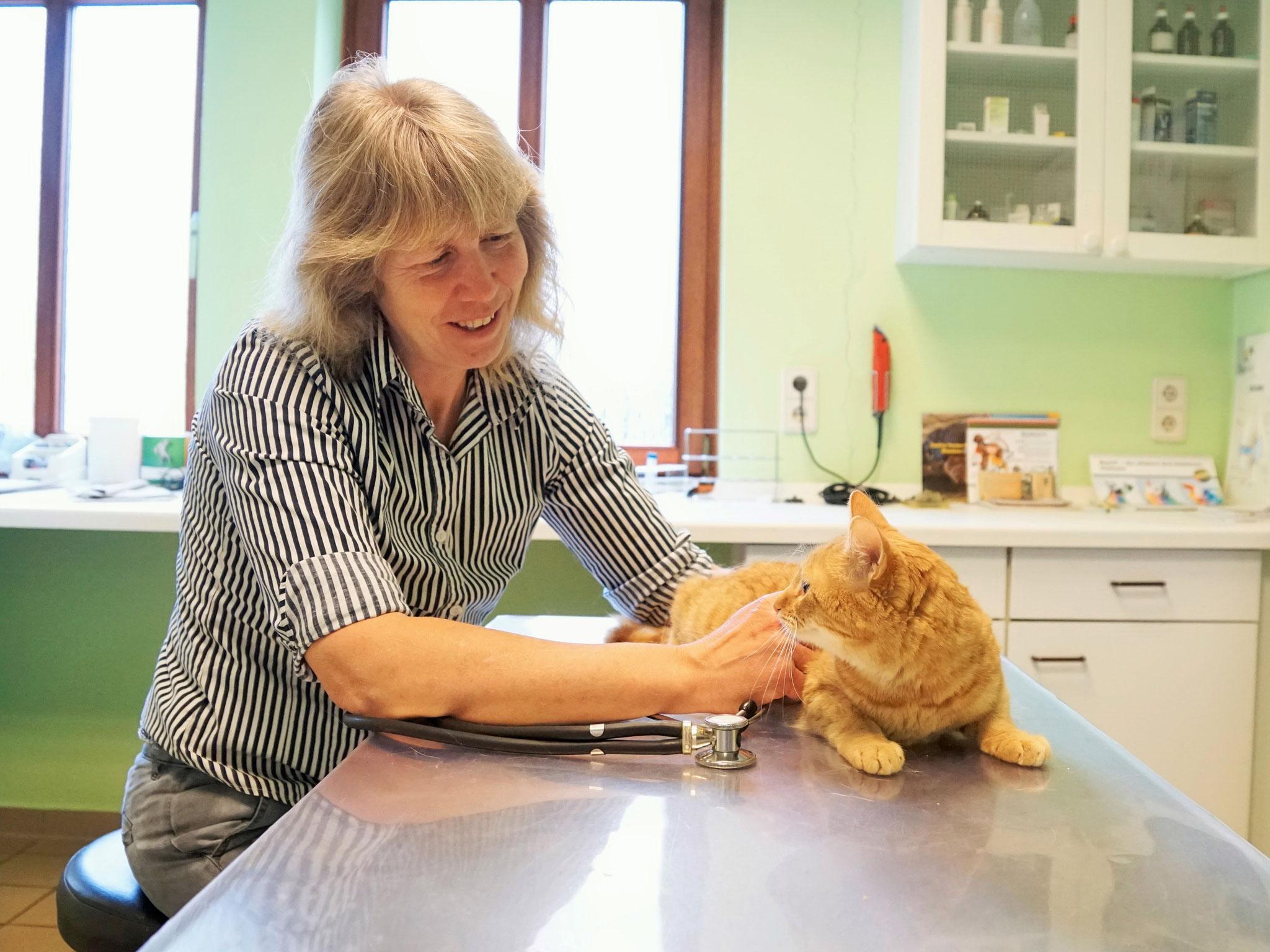 Behutsames Kennenlernen zwischen der Tierärztin und ihrer Patientin Ginny
