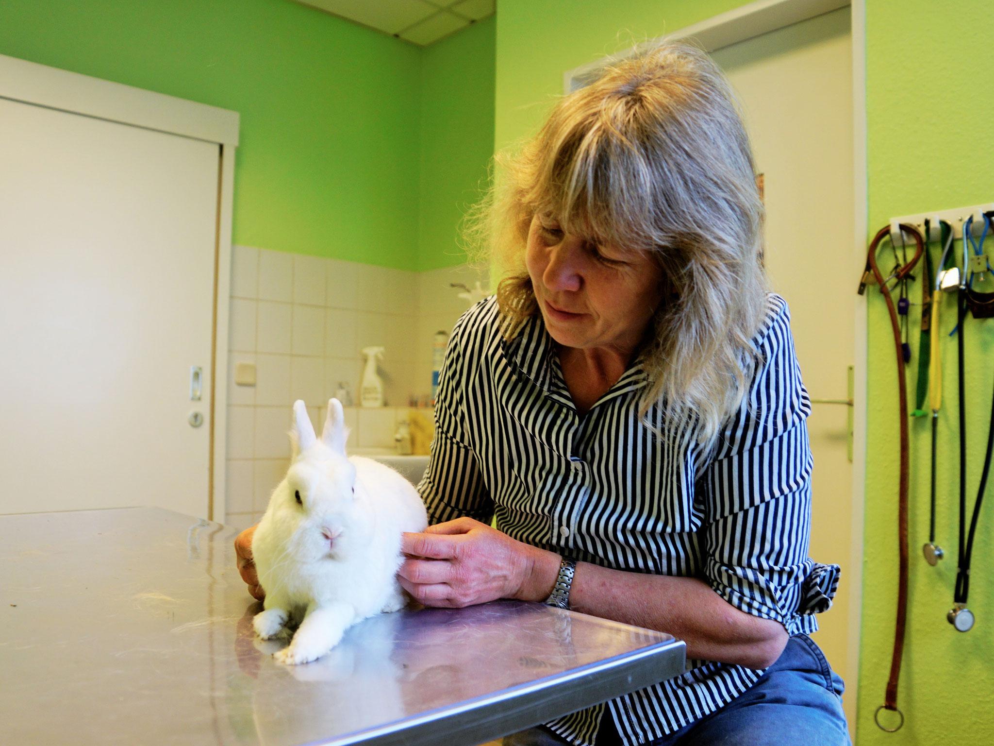 Wegen ihres empfindlichen Verdauungstrakts ist das Abtasten des Abdomens bei Kaninchen ein wichtiger Bestandteil der Untersuchung.