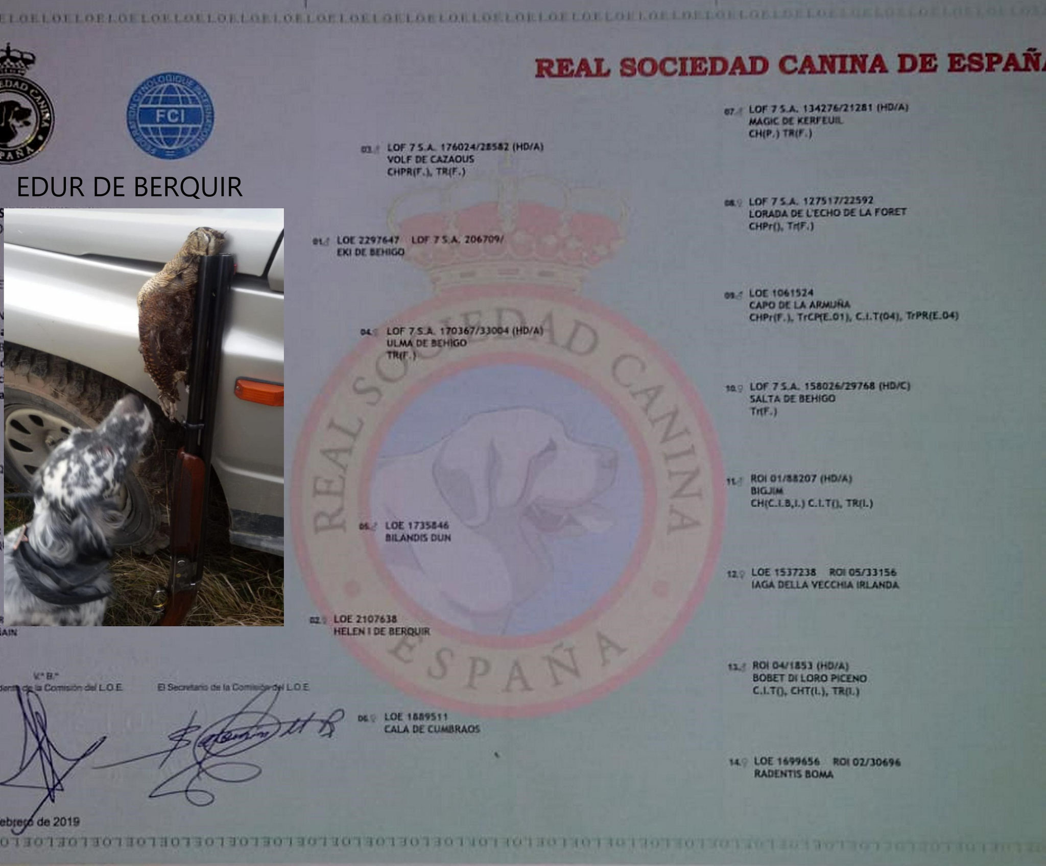 "- Pedigree ""EDUR DE BERQUIR"" -"