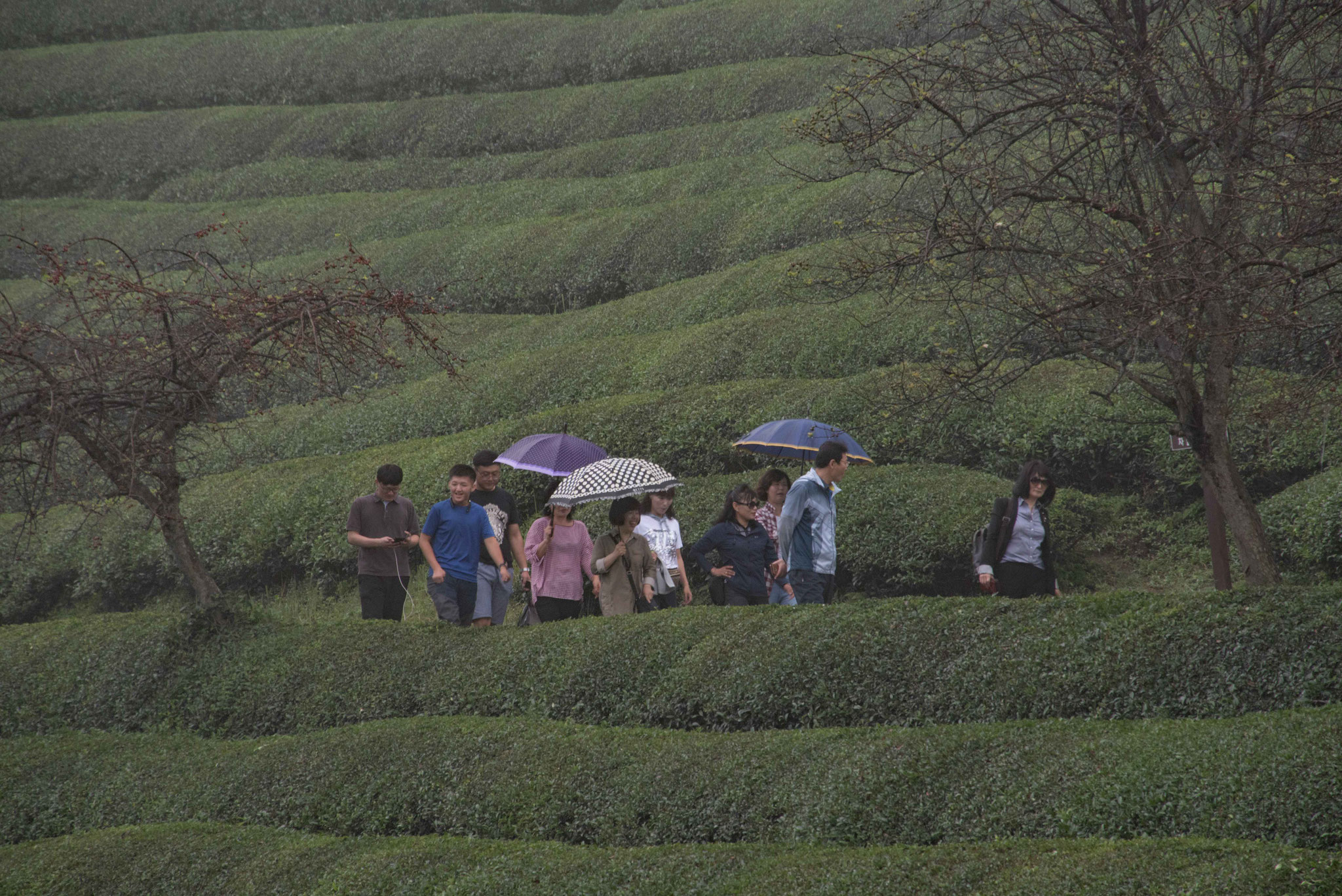Gruppe Südkoreaner bei der Besichtigung