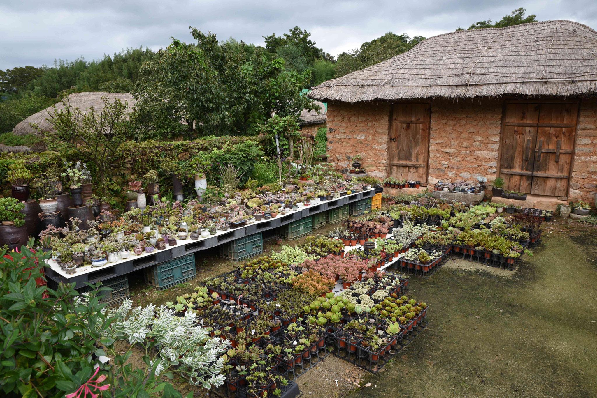 Aufzucht diverser Pflanzen
