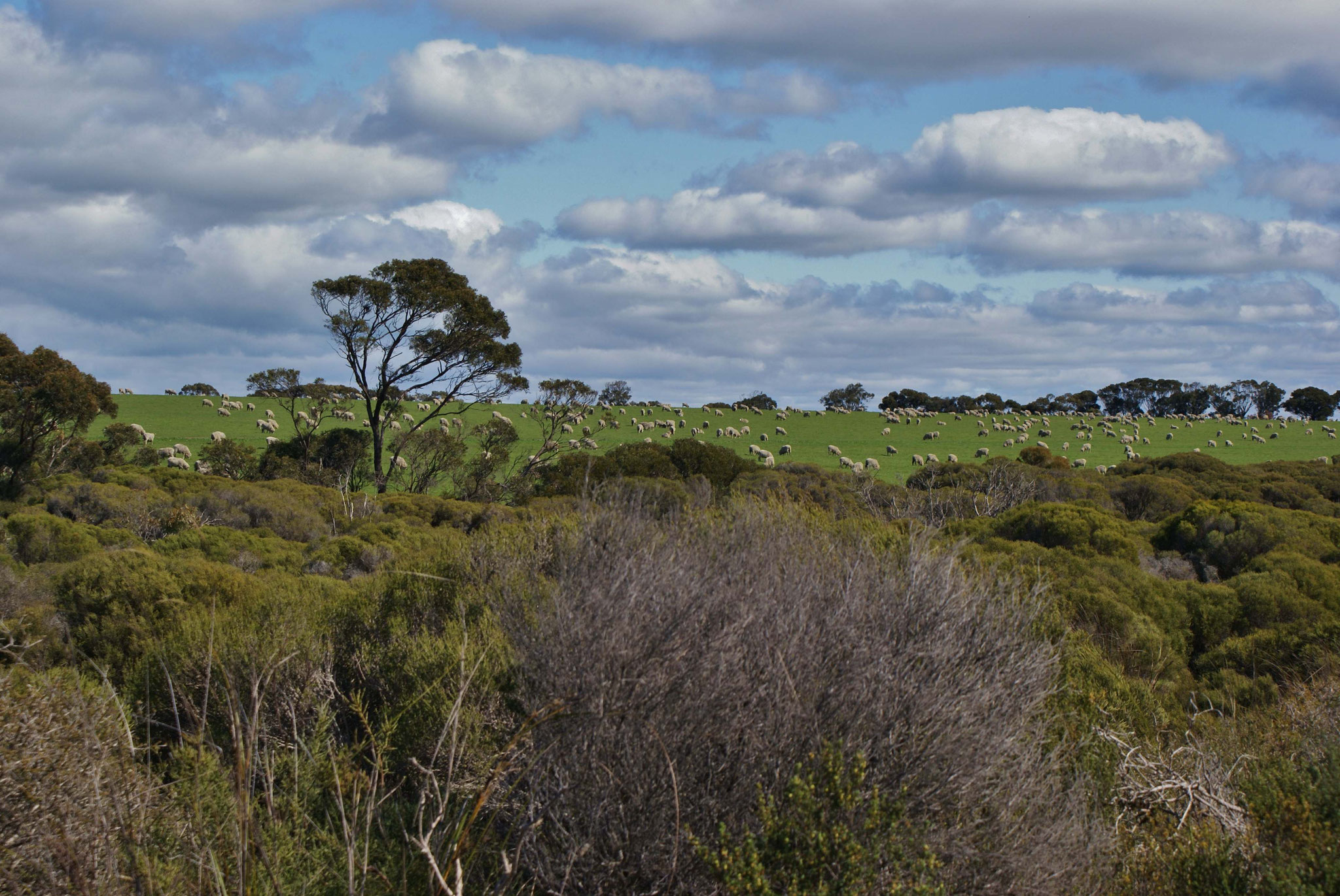 Schaffarm auf Kangaroo Island