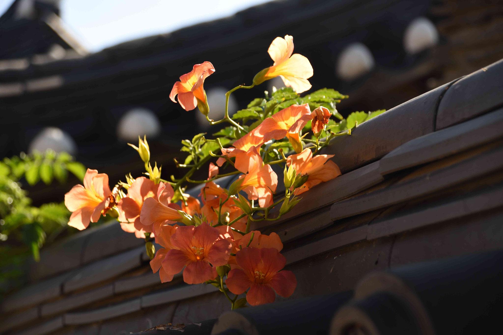 Blumen über Zaunmauer