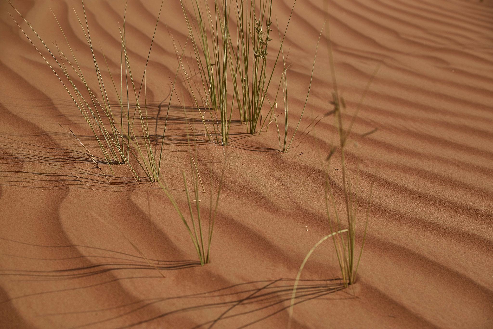 Grün in der Wüste I