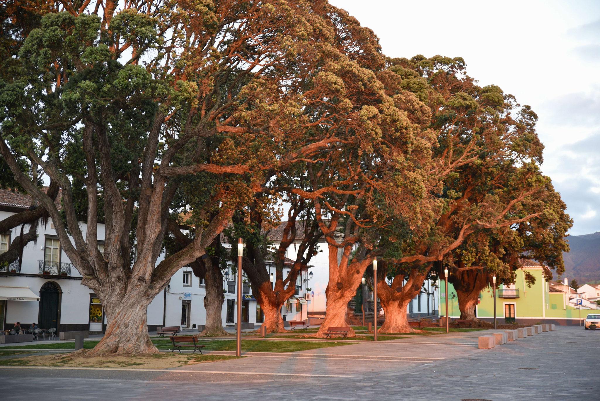 Kurz vor Sonnenuntergang strahlen die Bäume wunderschön
