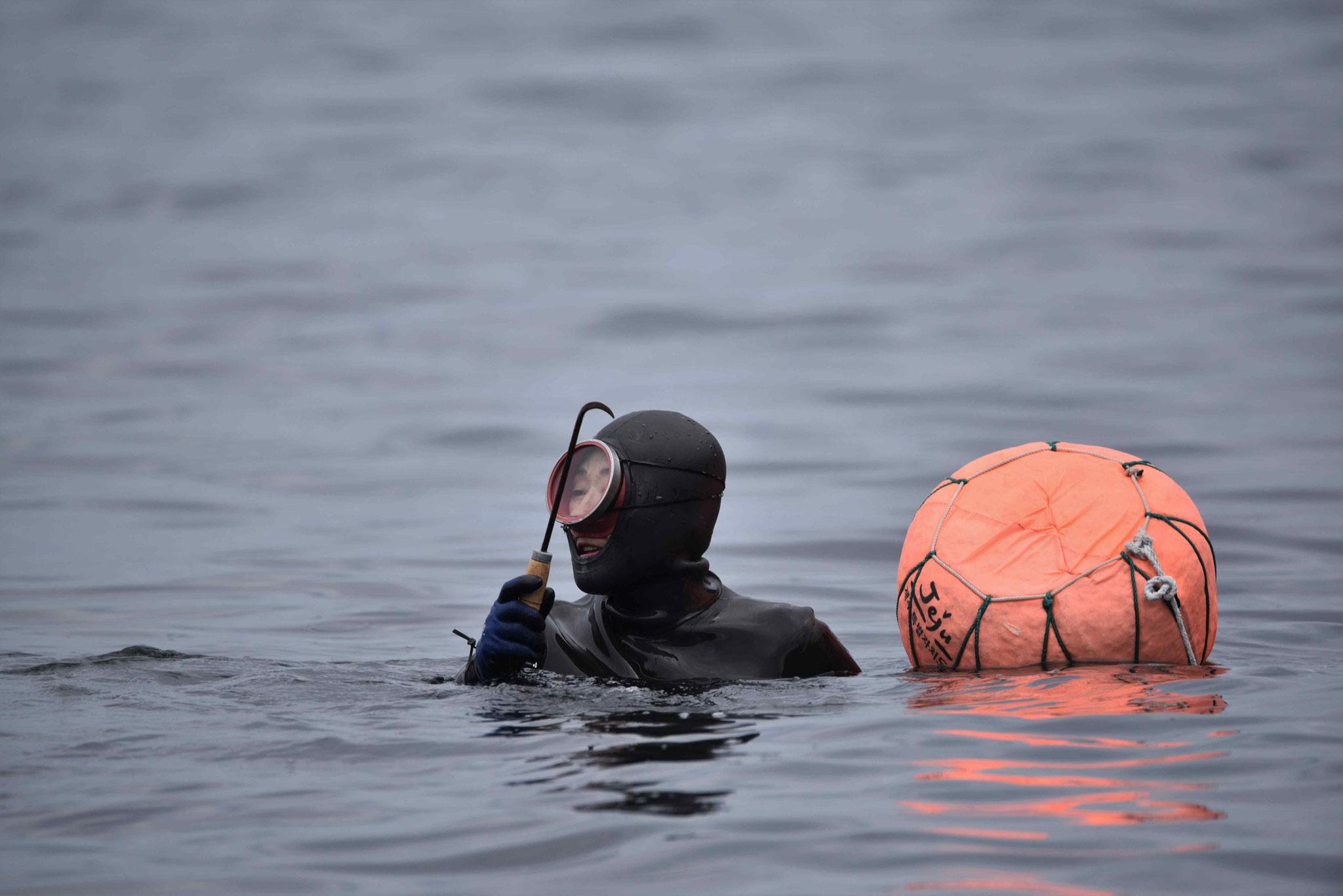 Der Haken ist scharf um Meeresfrüchte von Steinen zu entfernen