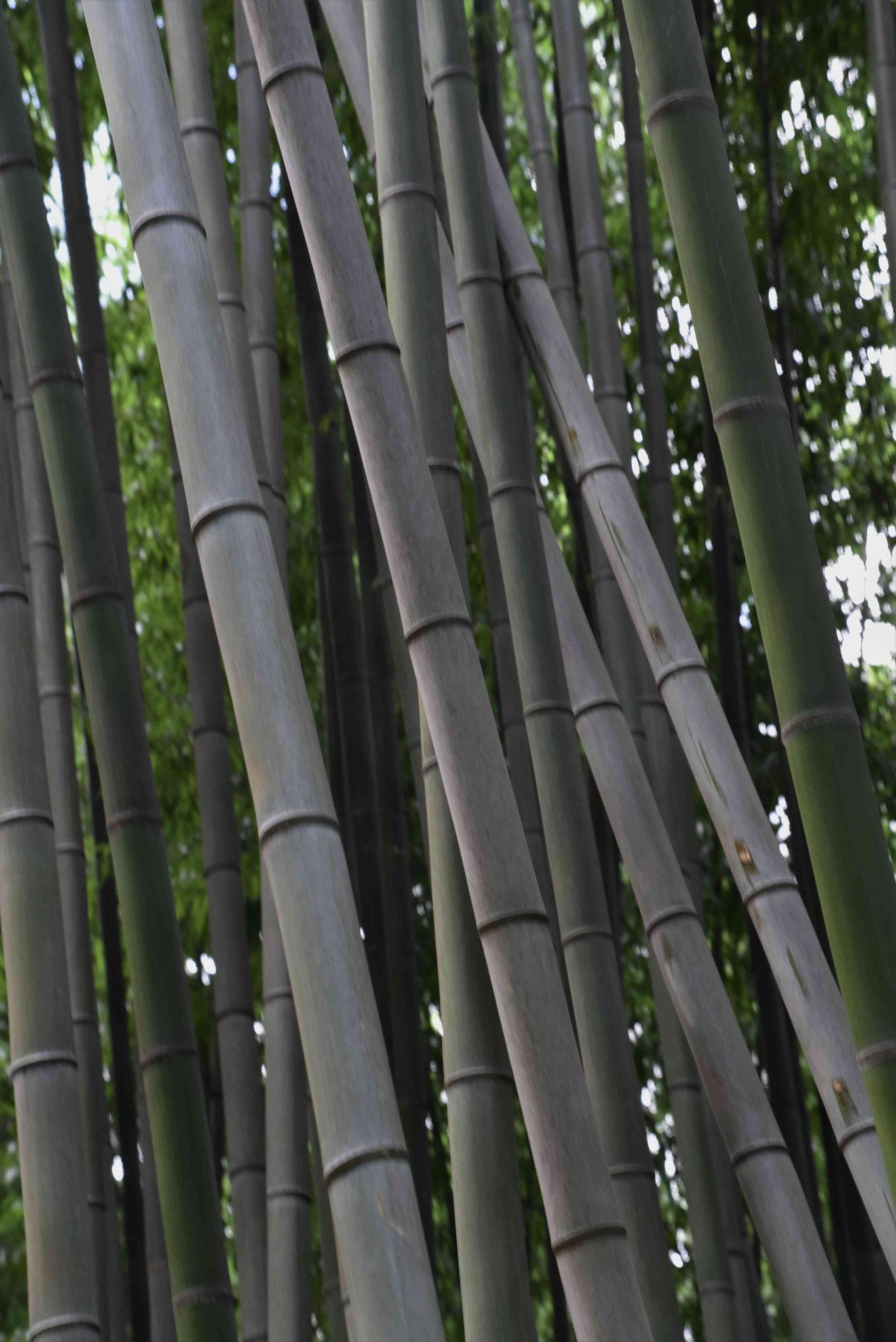Im Bambusrausch