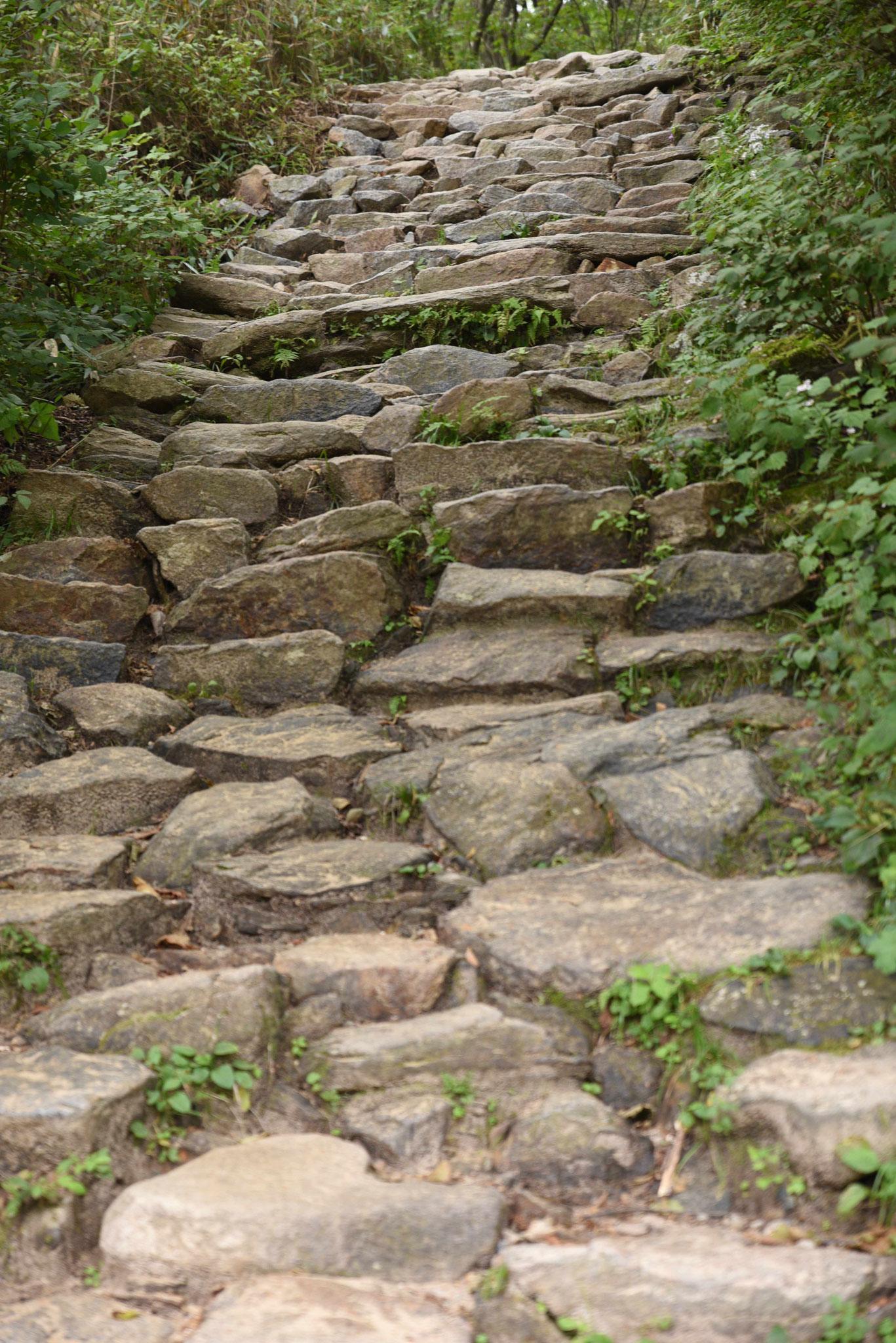 Steiniger Weg durch den Wald