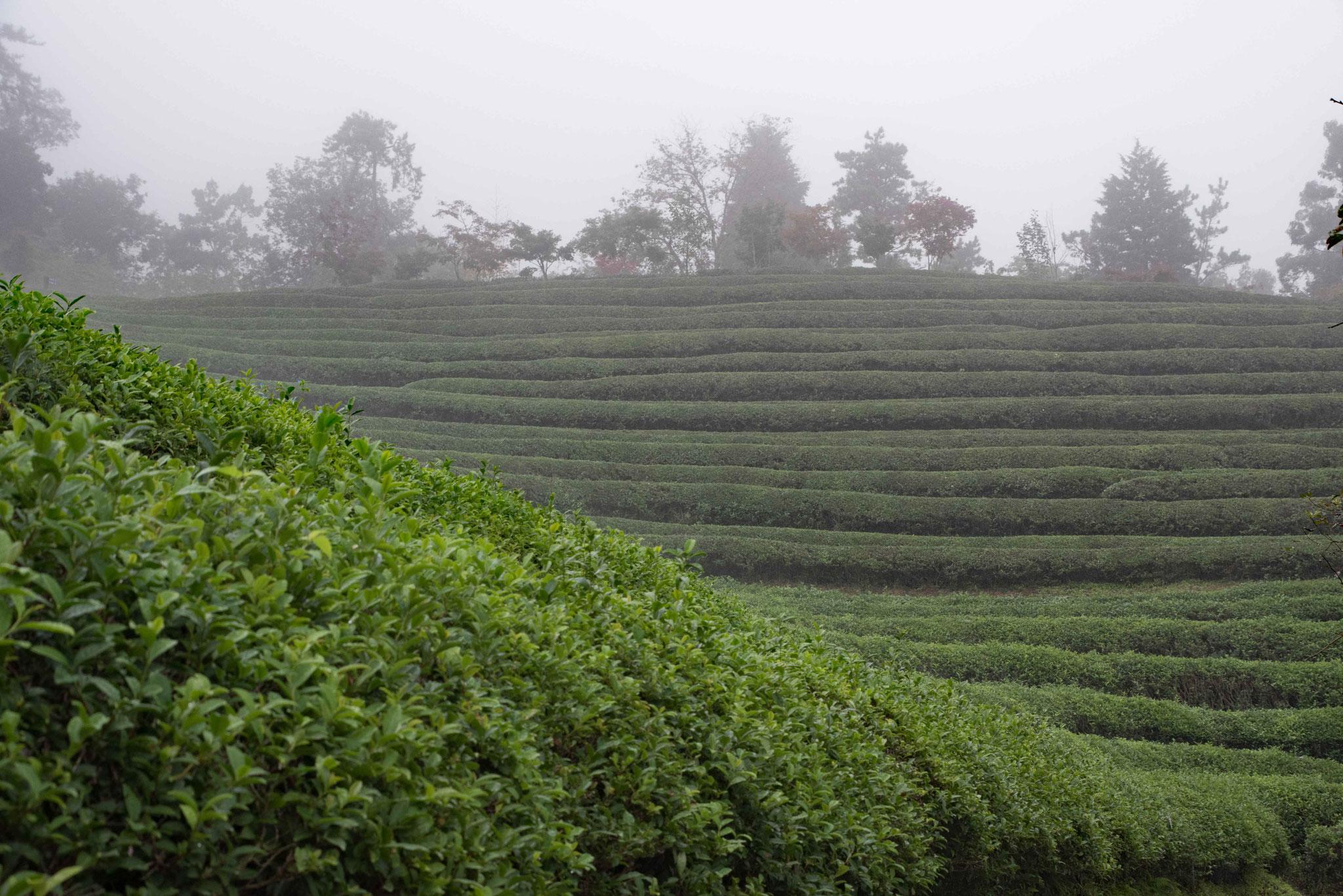 Ohne Regen und Nebel wäre das Erlebnis sicherlich genial