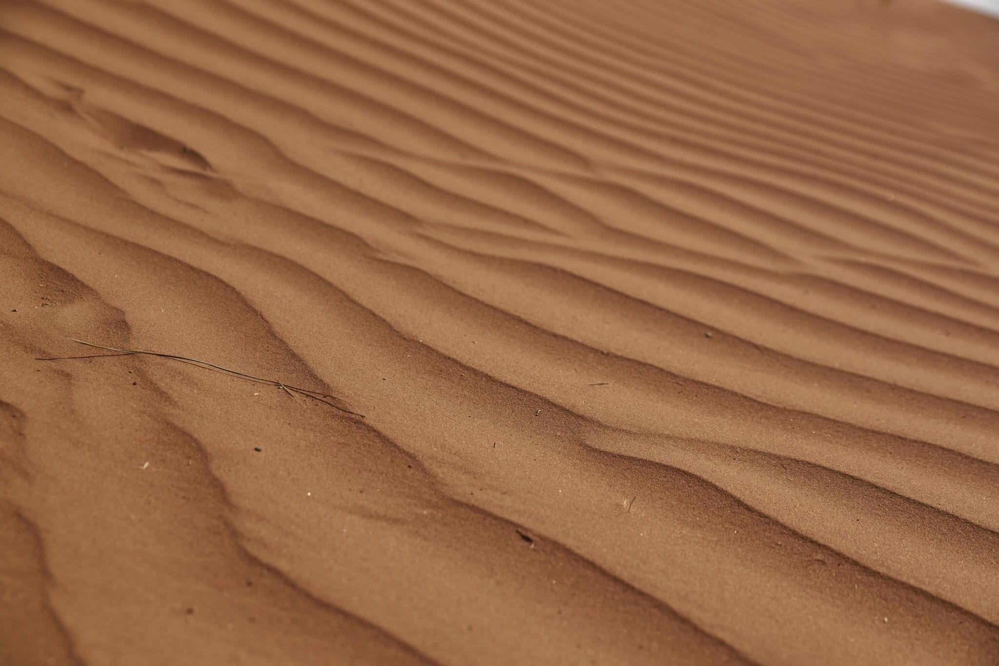 Erste Spuren der Wüste