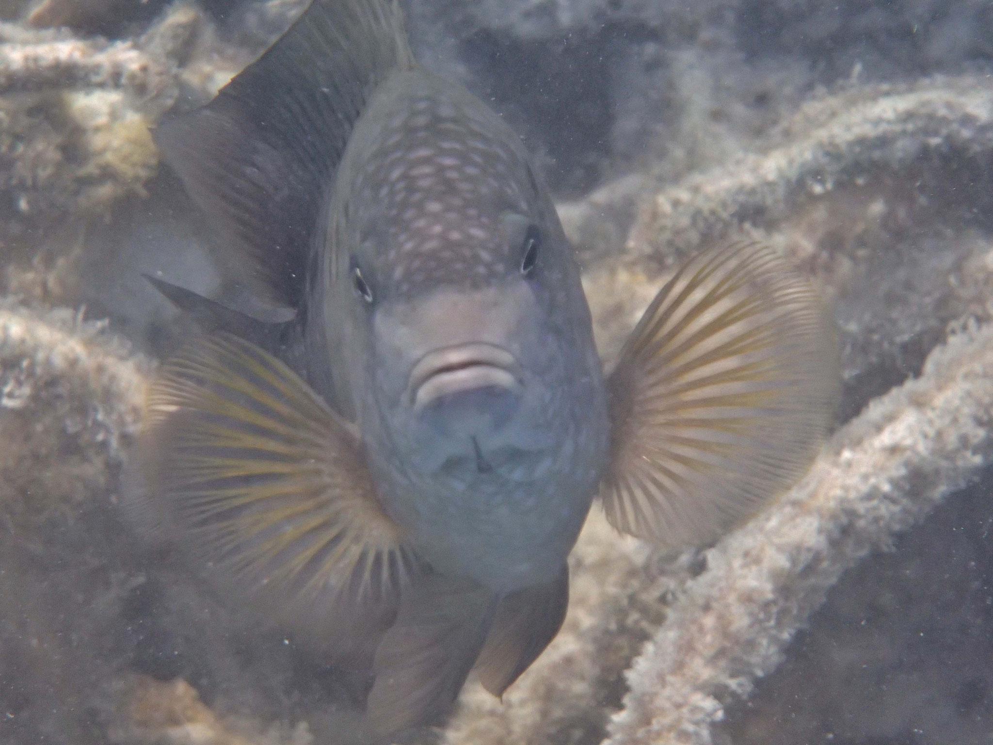 Beim Ningaloo- Reef