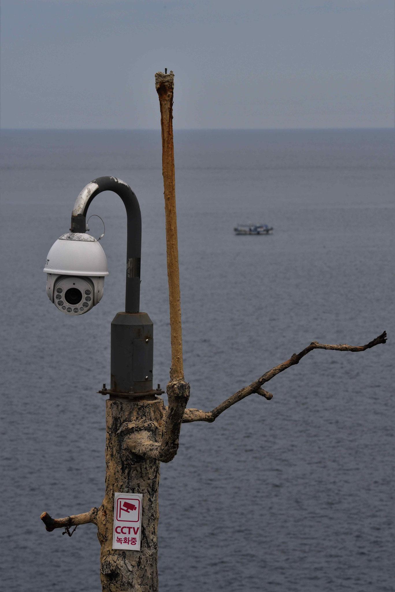 Überwachungskamera auf einer Baumimitation