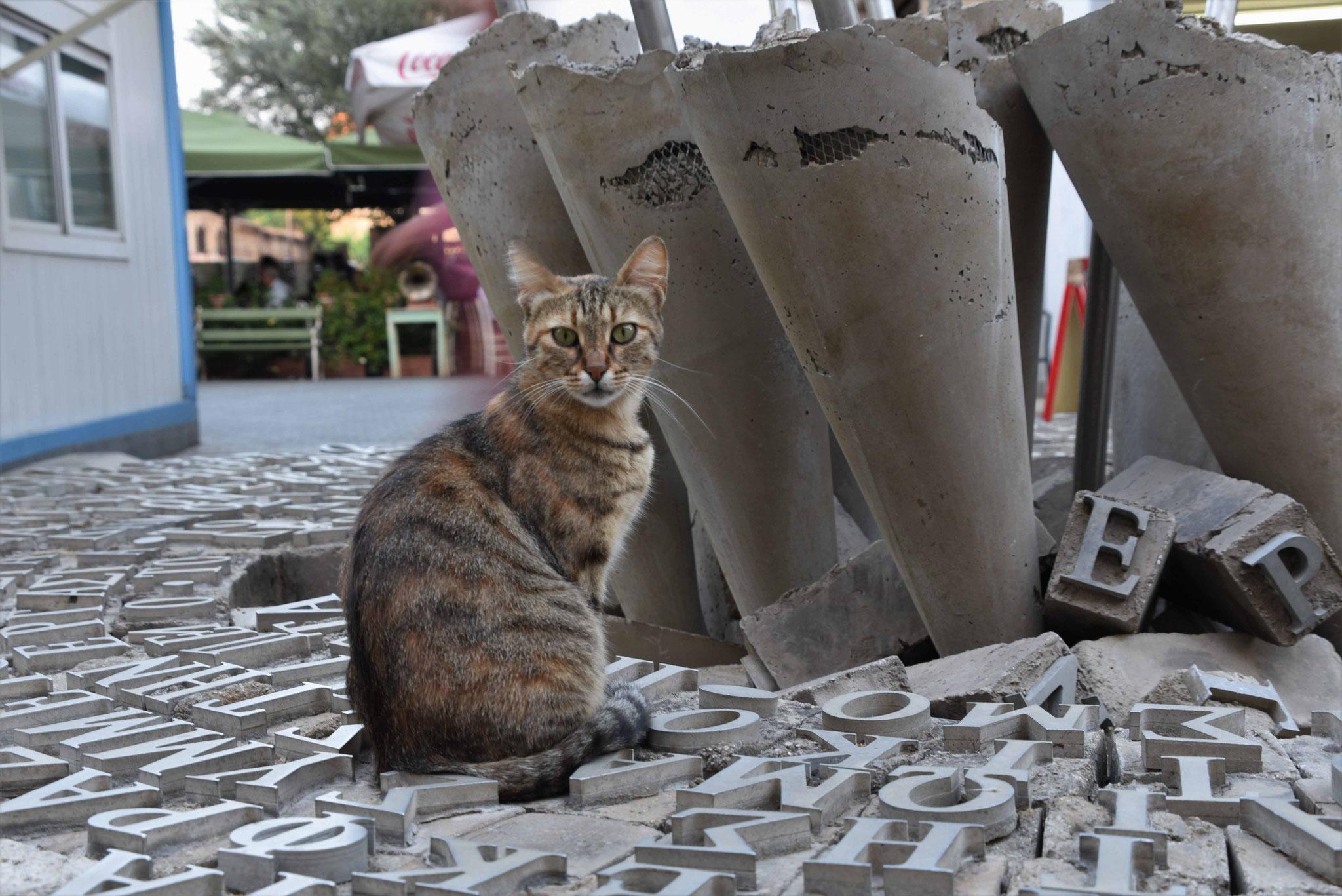 Katze auf dem Friedensdenkmal