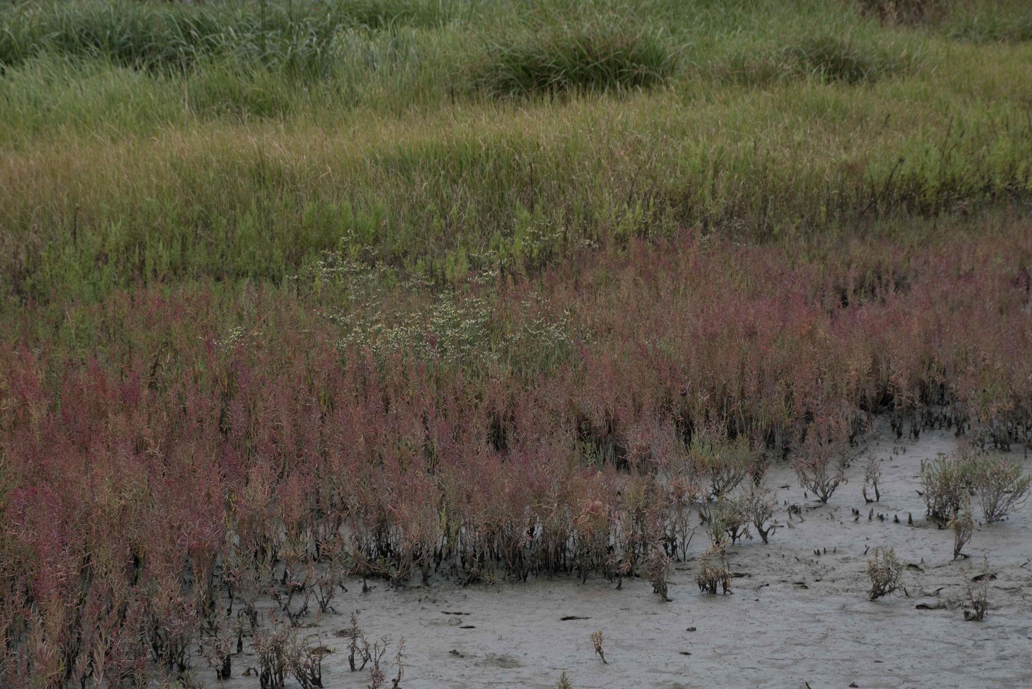 Vegetation im salzigen Gewässer