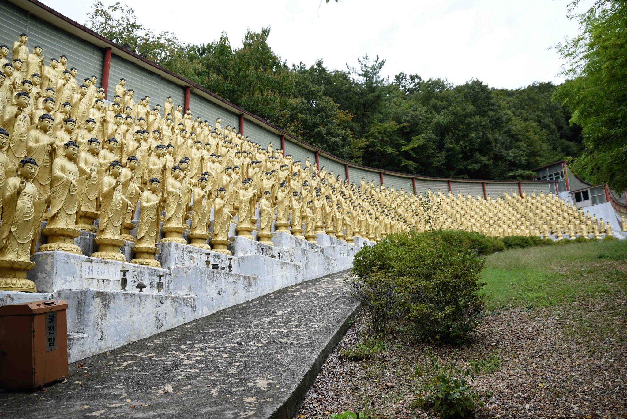 Die linke Hälfte von den 1000 goldenen Buddastatuen