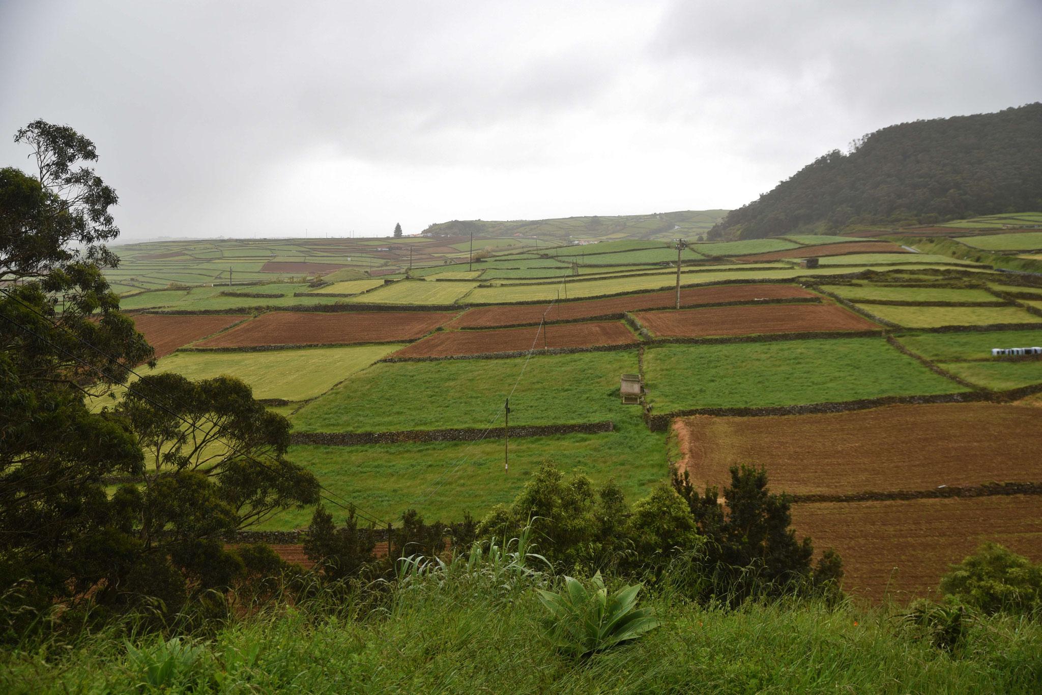Felderwirtschaft