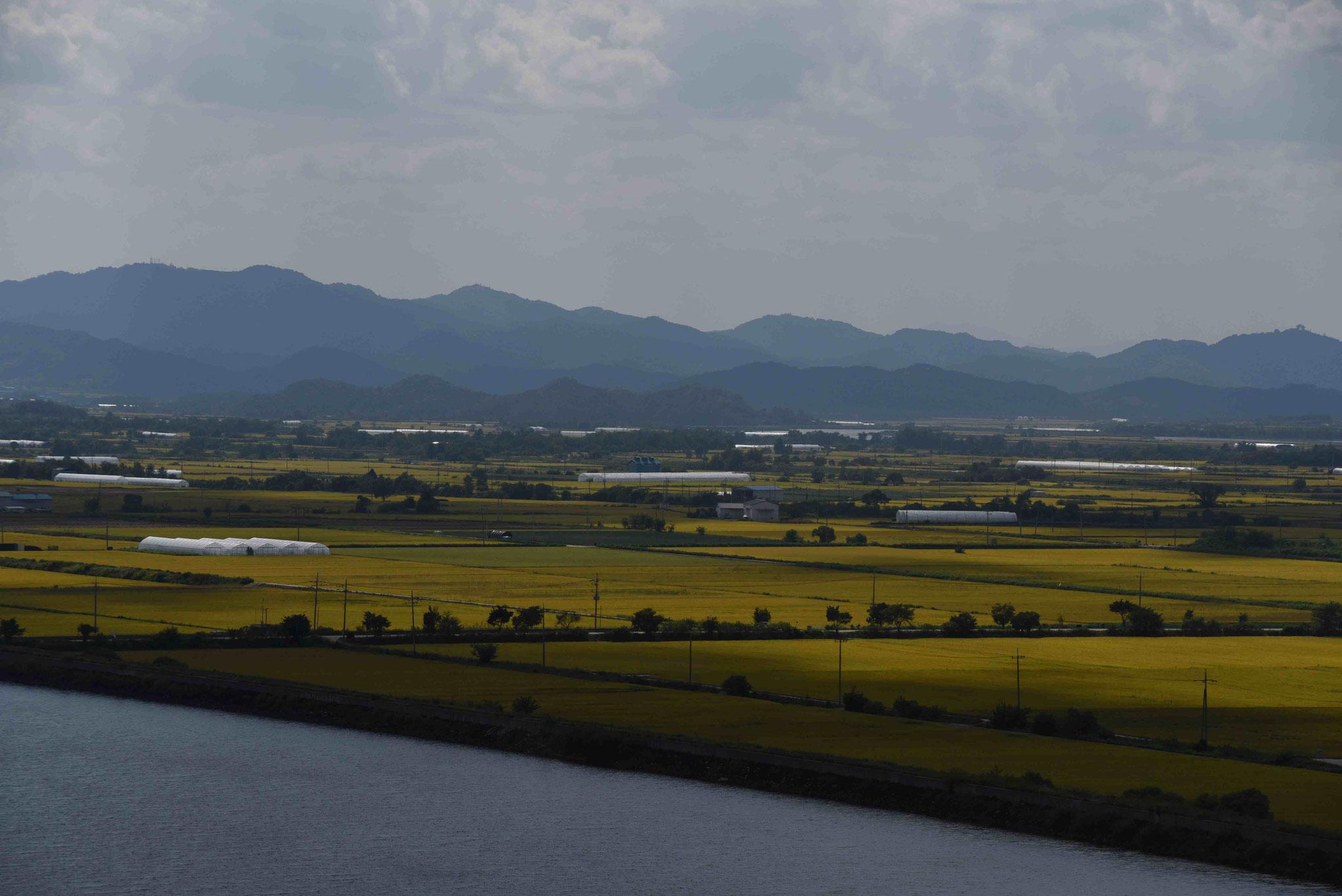 Reisfelder an der DMZ bei Cheorwon