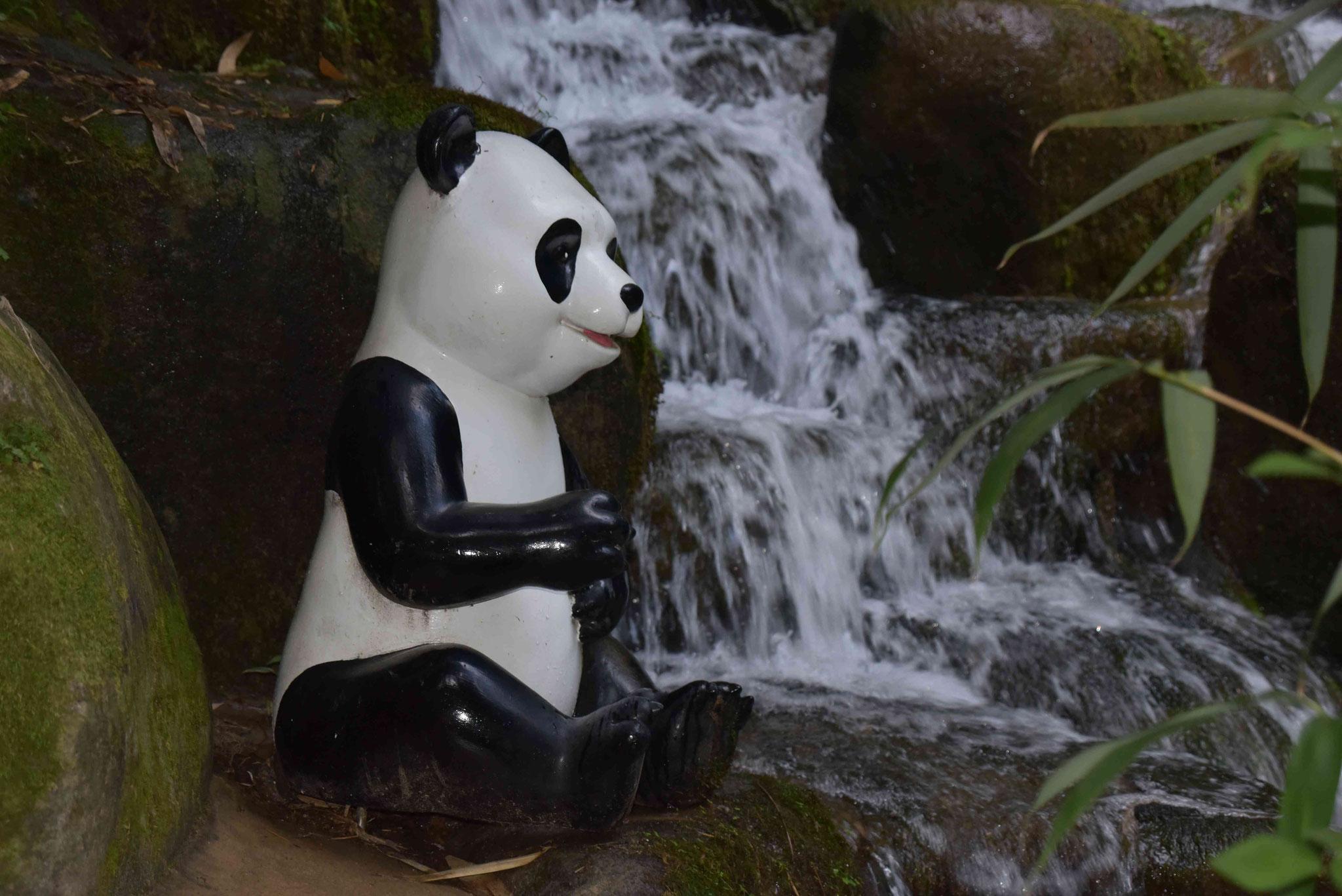 Pandabär am kleinen Wasserfall