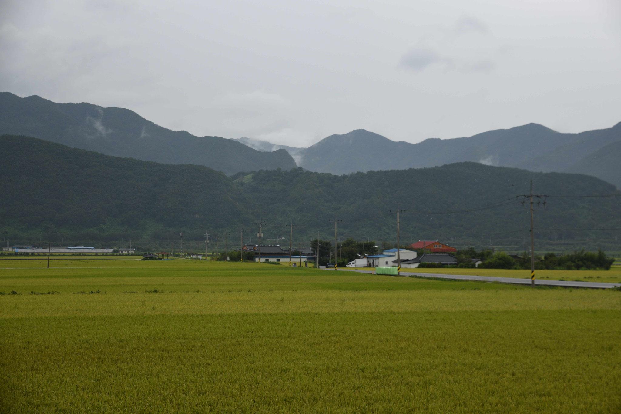 Reisfelder vor den Bergen des Jirisan-NP
