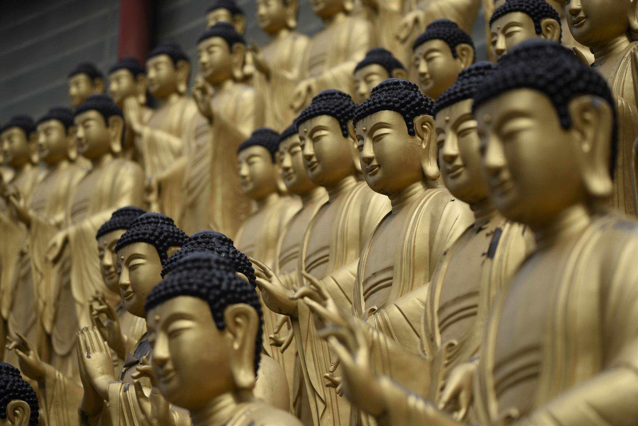1000 vergoldete Buddastatuen wirken beeindruckend