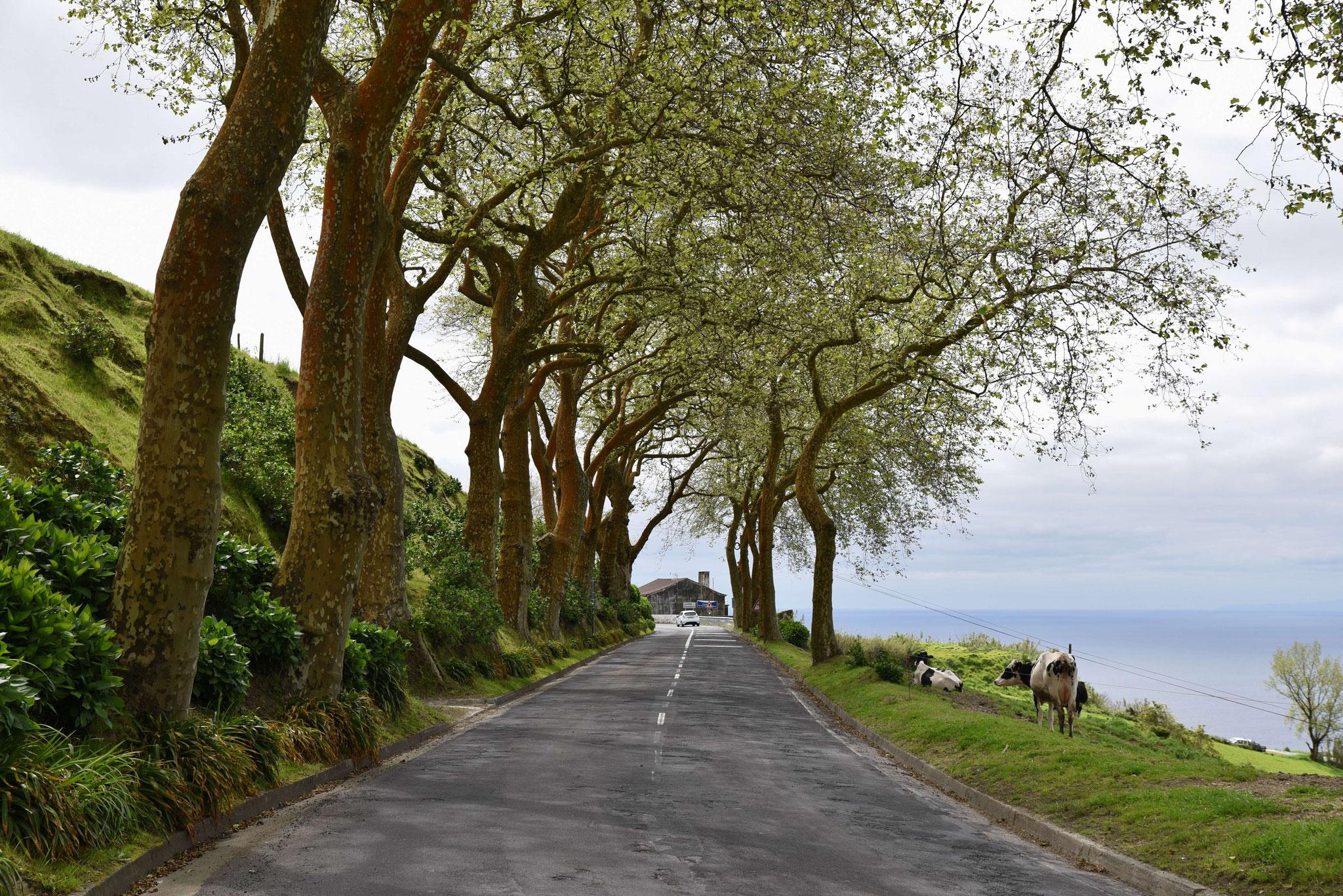 Schöne Küstenstraße