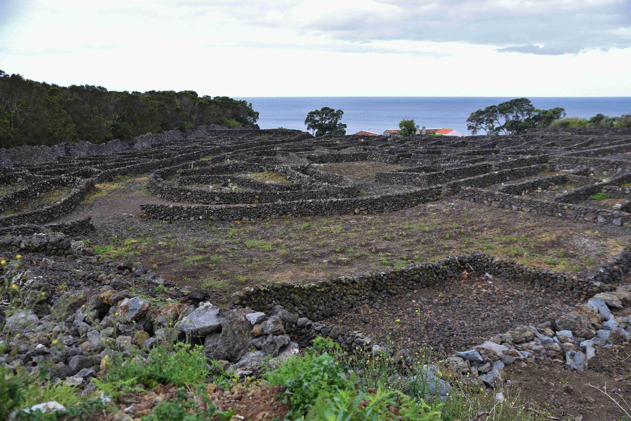 Steinmauern beherrschen große Teile der Insel