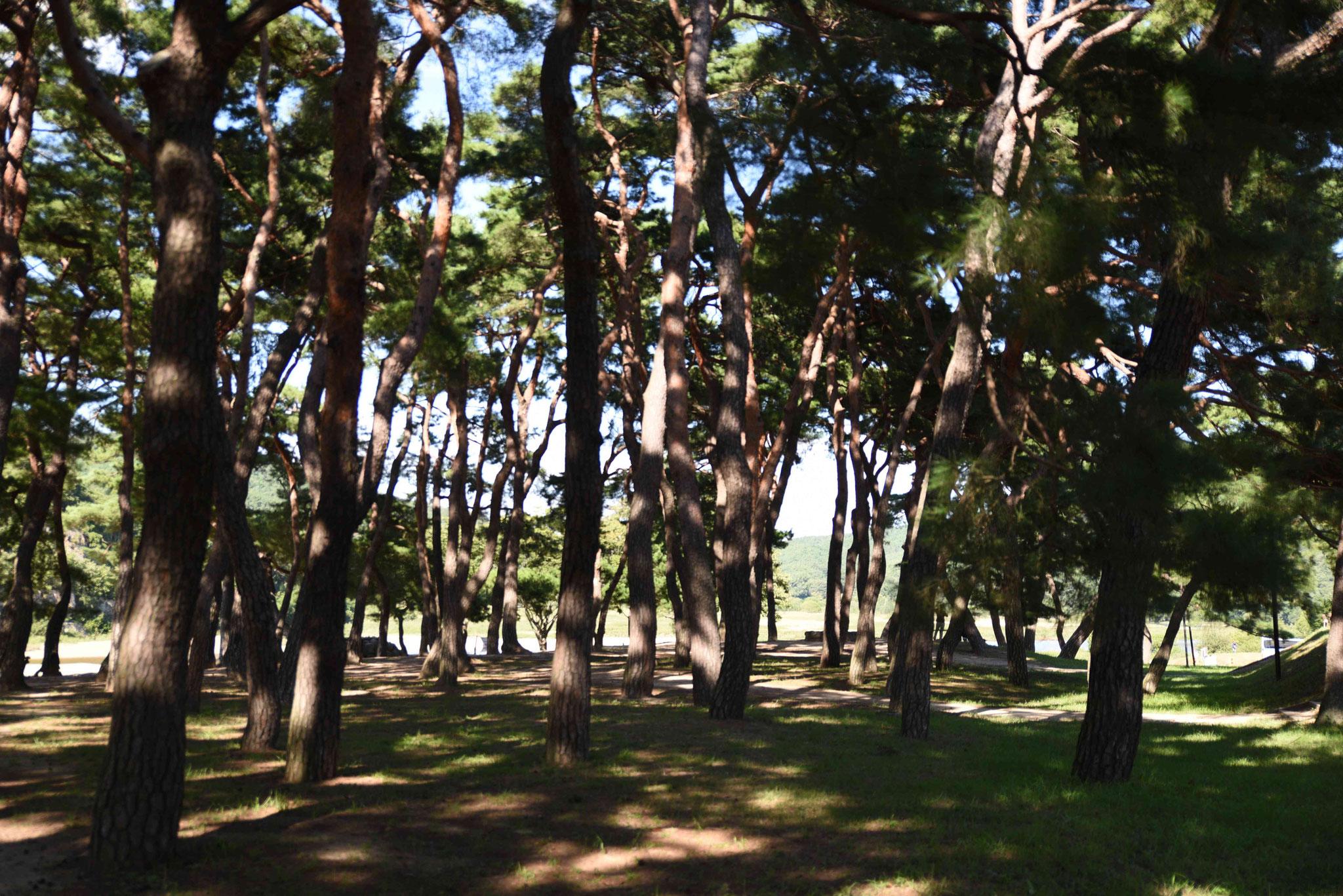 Herrliche Ruhe im Schatten der Bäume