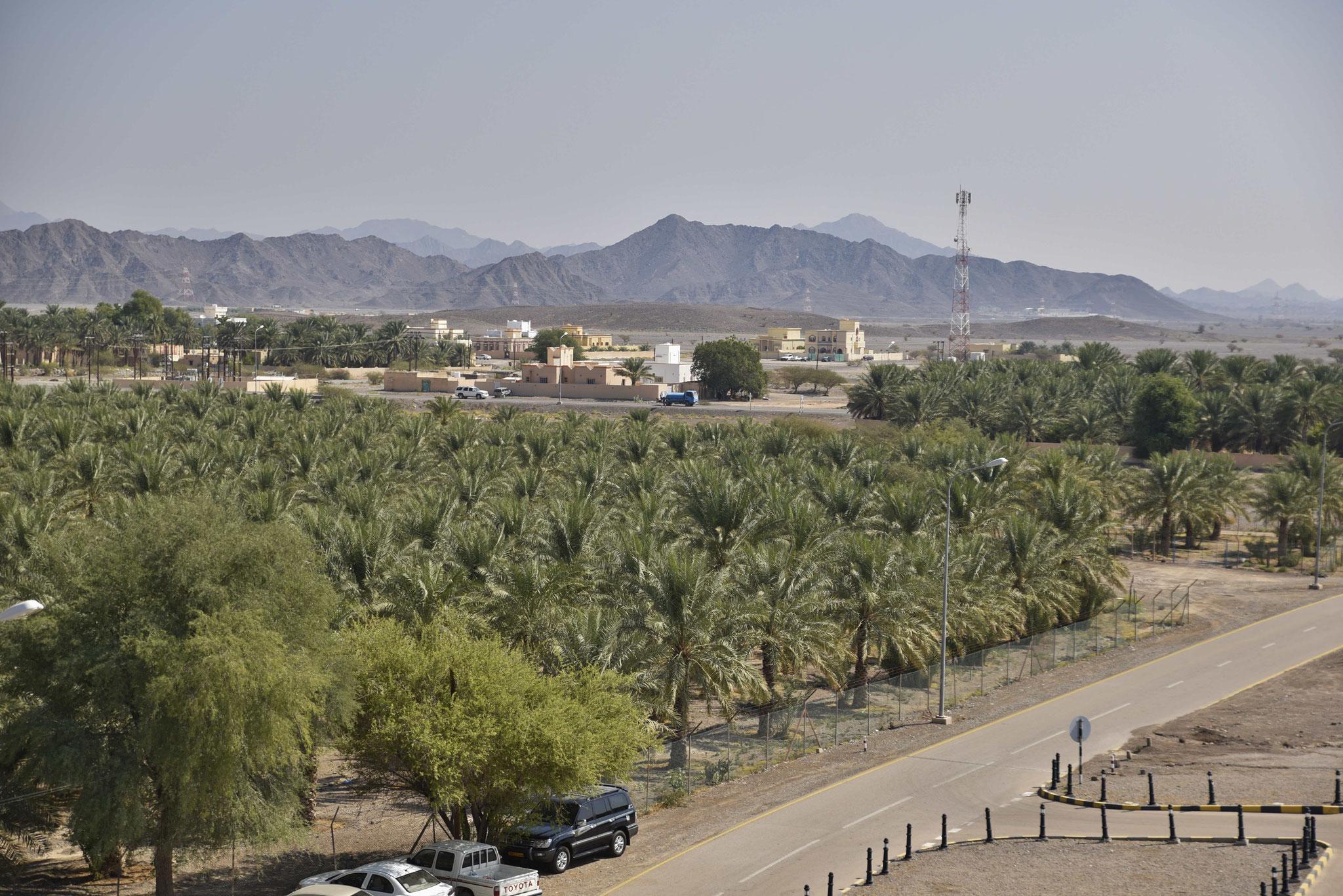 Blick auf Palmenfelder