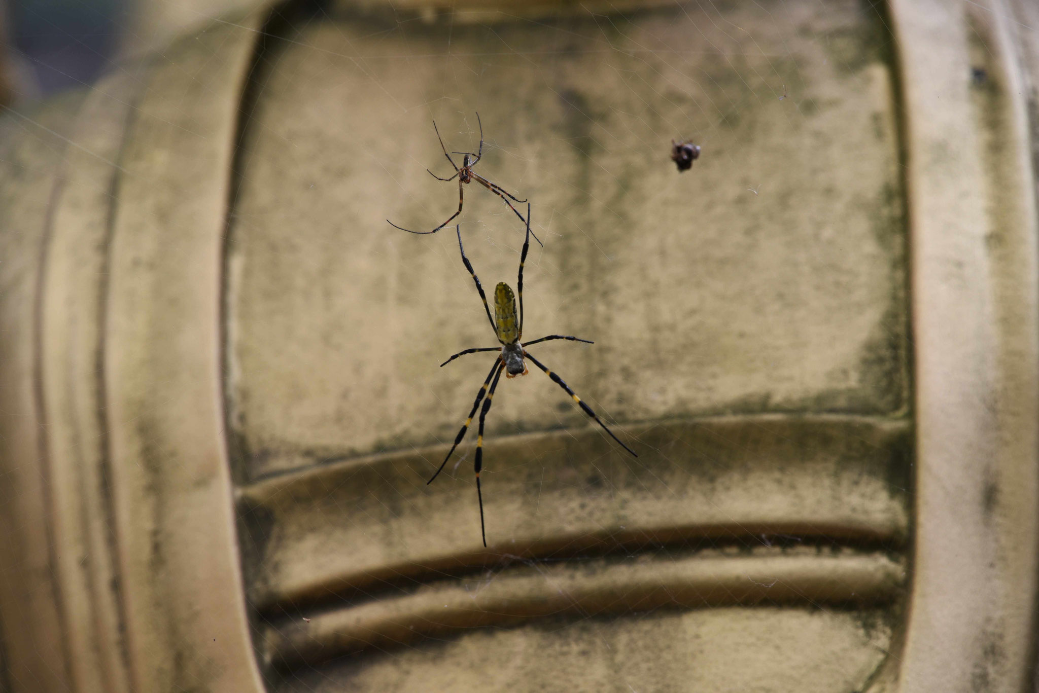 Spinne - auch sie verwendet ein Netz um zu fangen ;-)
