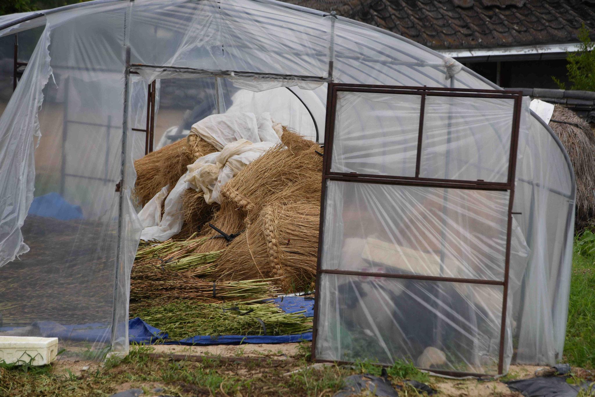 Gewächshaus wird auch als Lager verwendet