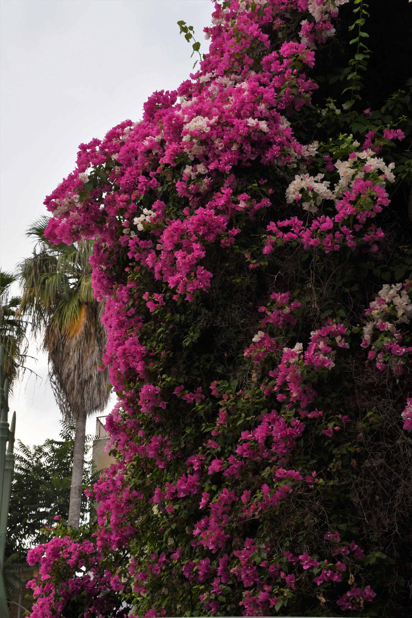 Schöne Bäume und Büsche findet man immer wieder