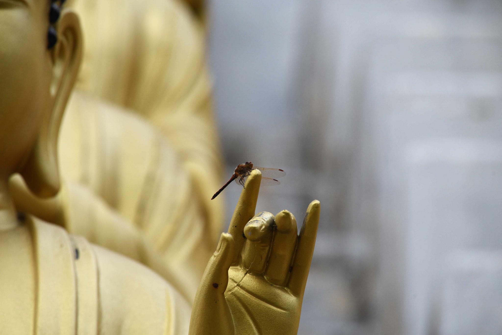 Libelle auf einem Finger - ein Fingerzeig?