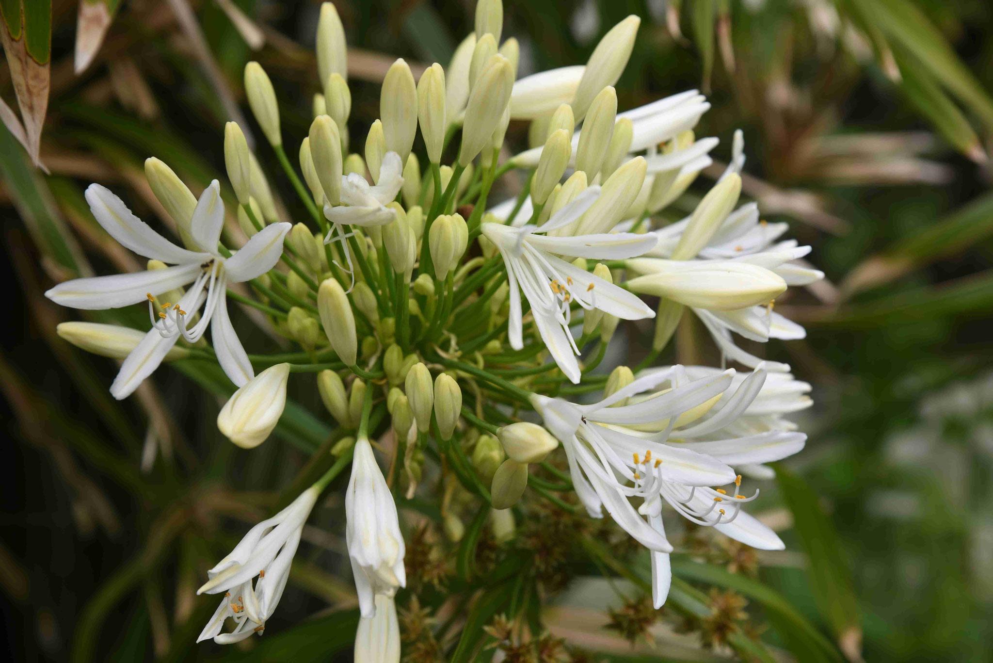 Schöne Blumen findet man viele im Park und auf den Inseln