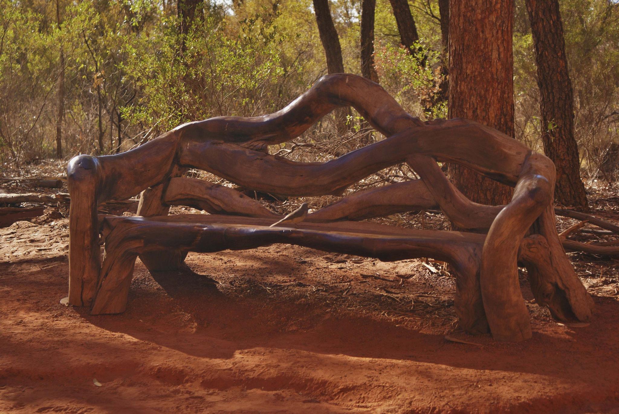 Von Aborignal gemachte Sitzbank - traumhaft bequem (nicht nur für den Vogel)