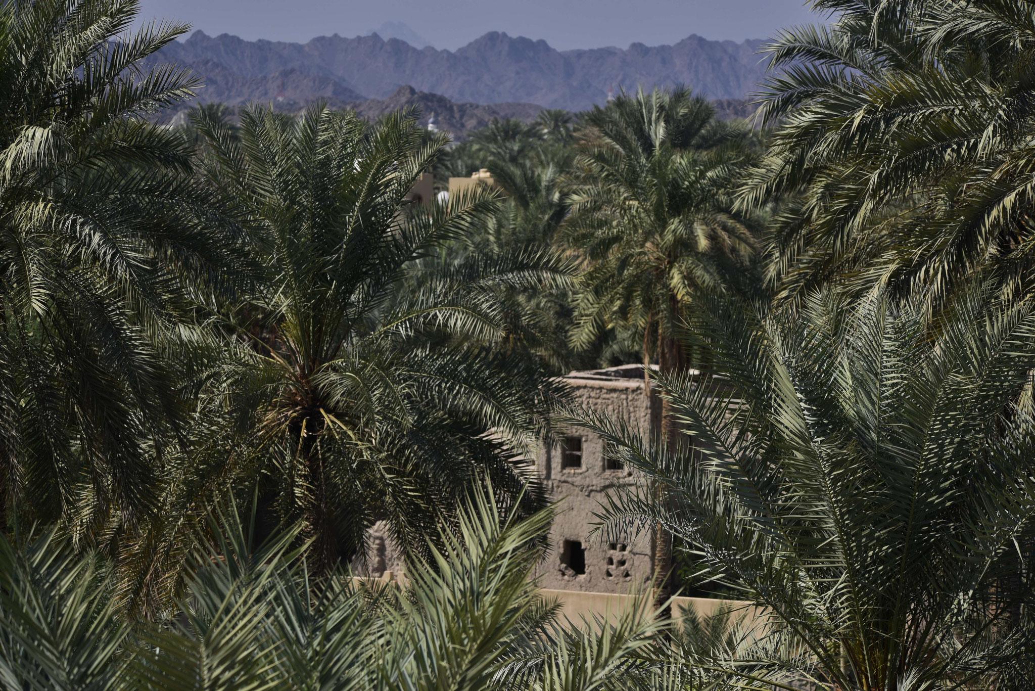 Nizwa liegt am Rande von zwei Wadis