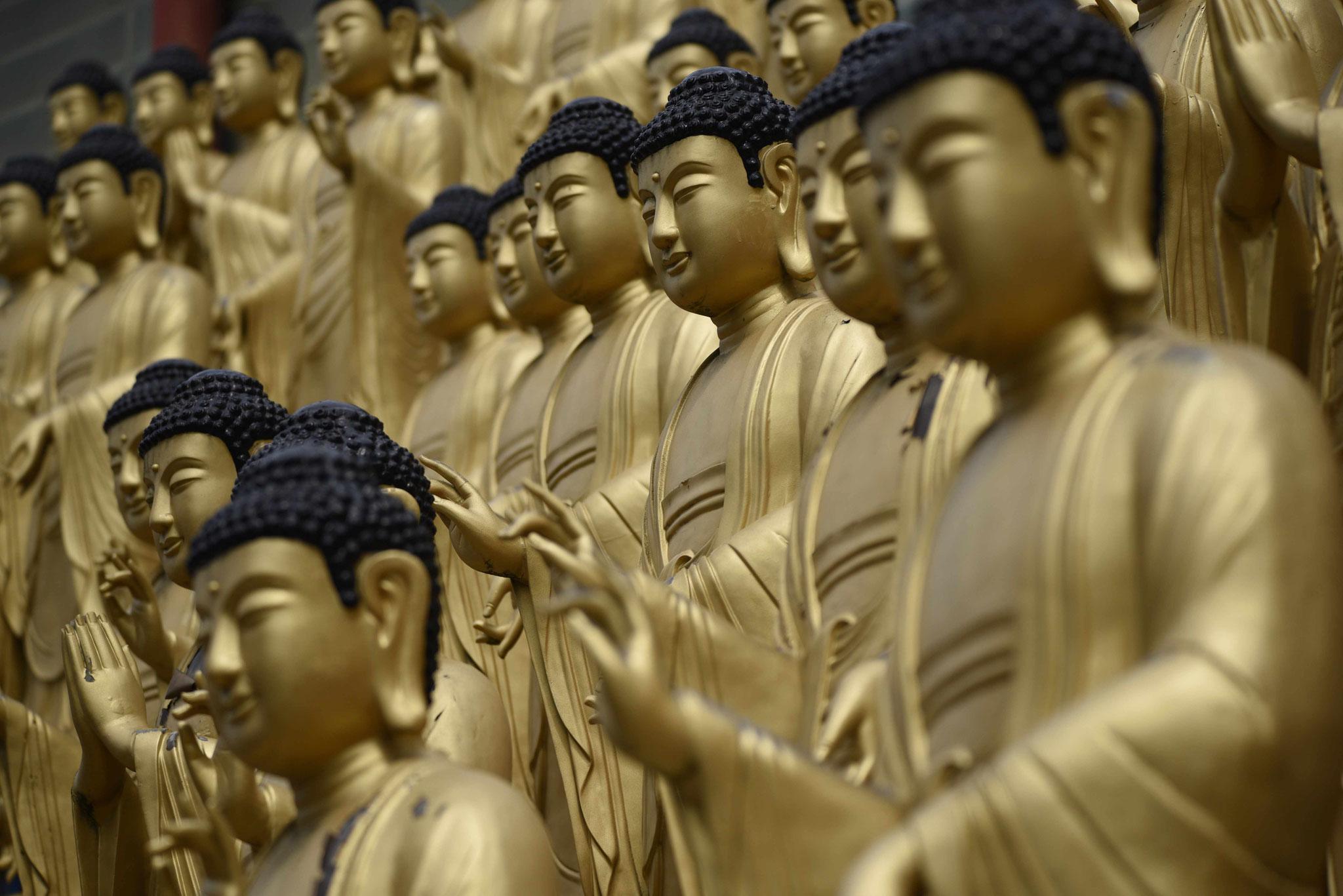 In Reih' und Glied: Buddas