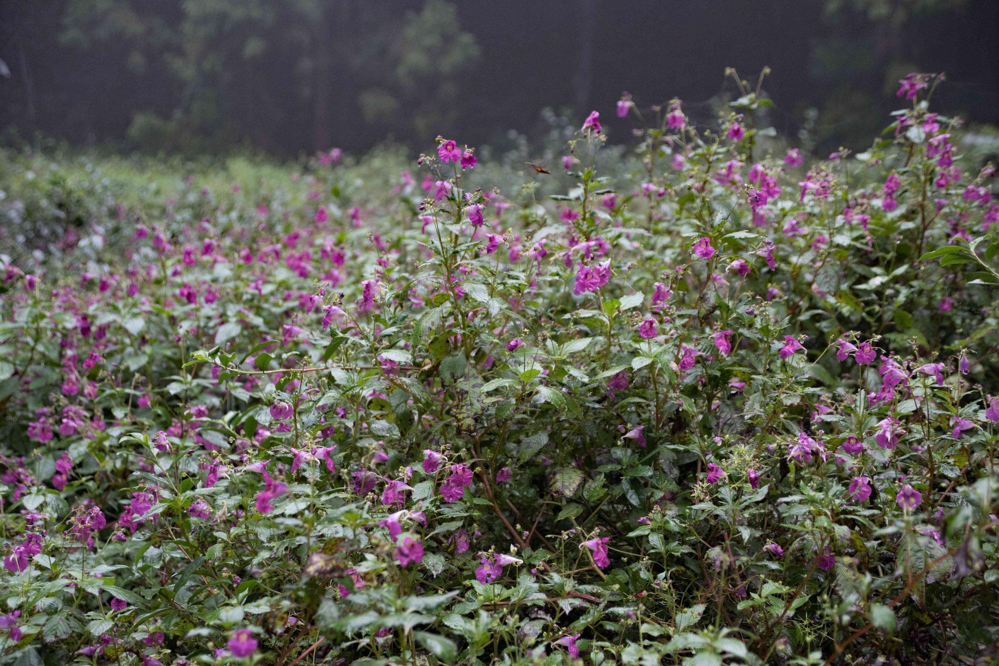 Bunte Blumen am Rande der Plantage
