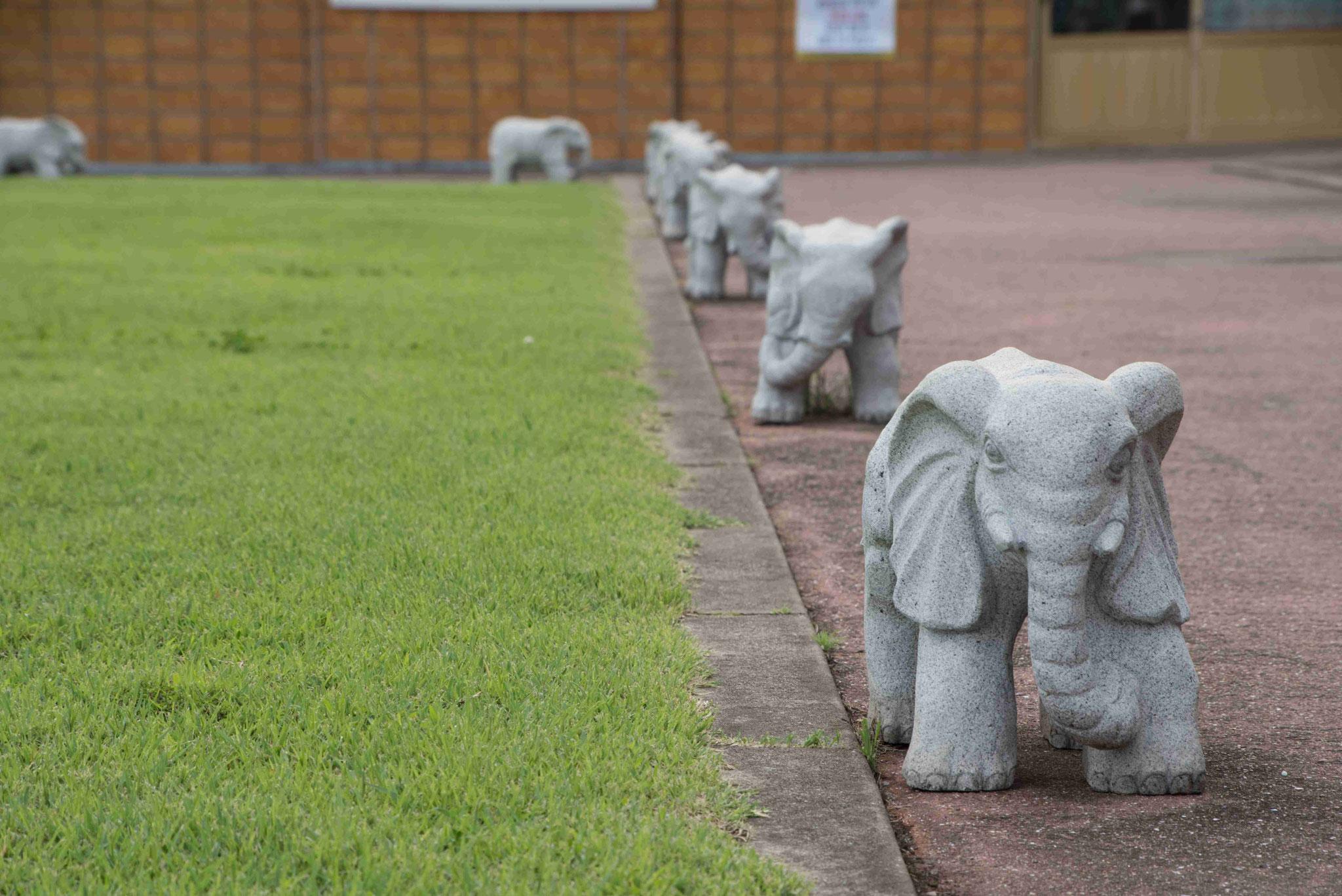 Elefanten haben sehr hohes Ansehen im Buddhismus