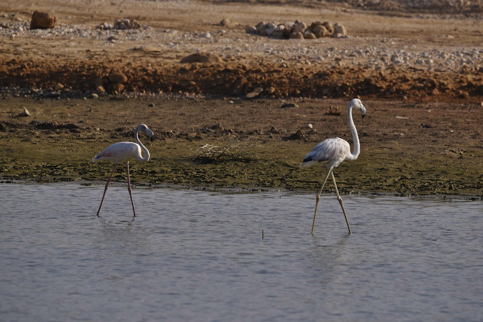 Selbst im November konnten wir ein paar Flamingos sehen