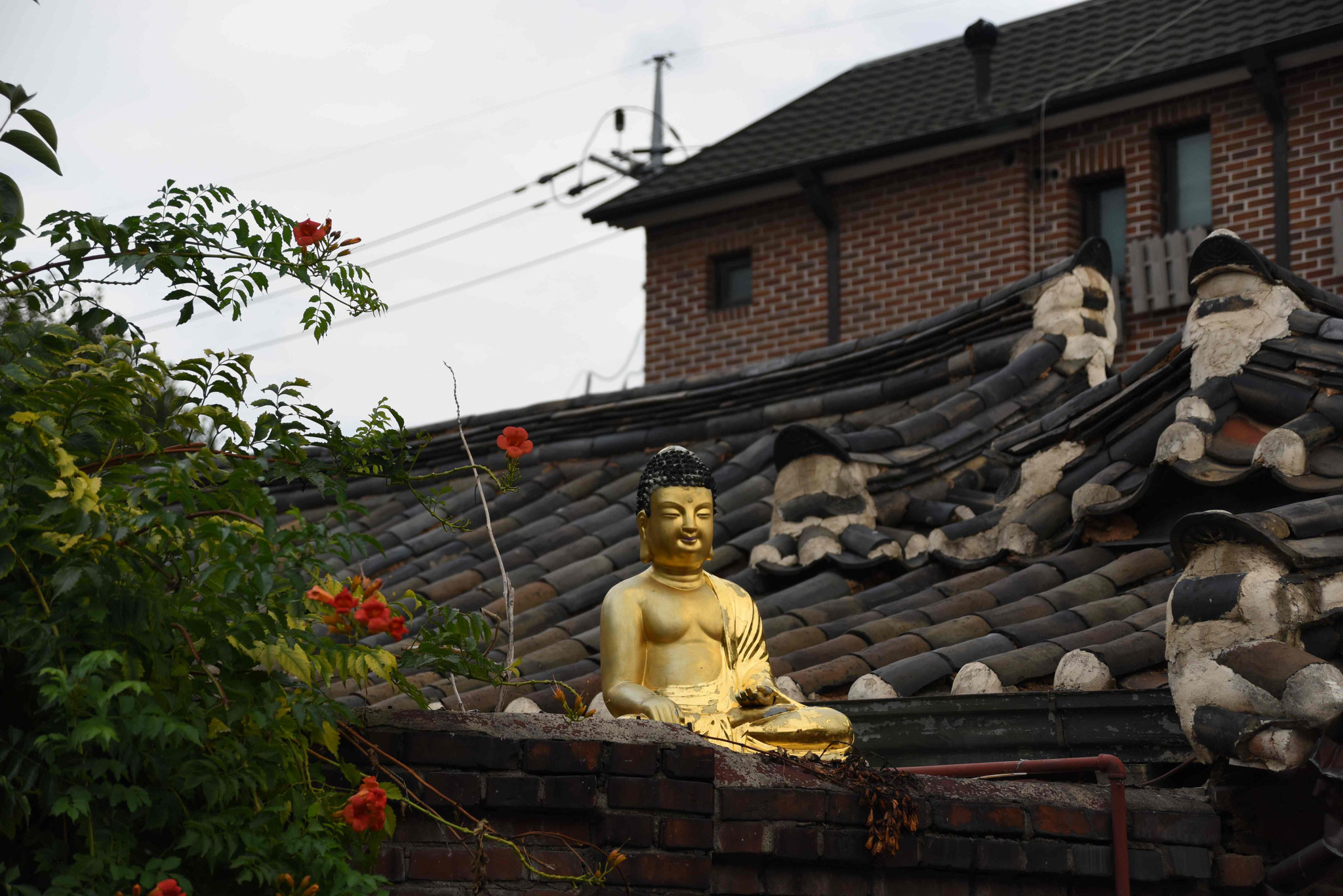 Verehrung Buddas auf dem Dach
