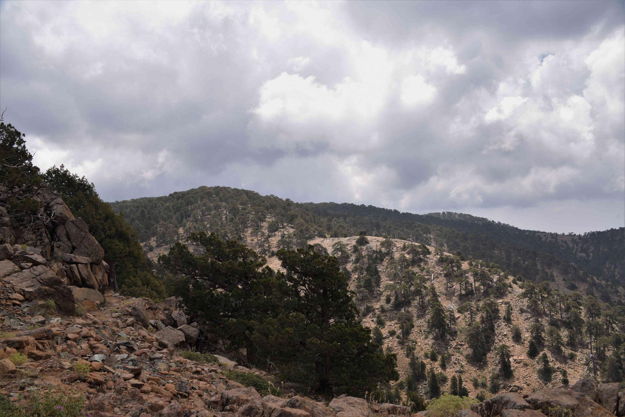 Blick über das Tróodos-Gebirge I