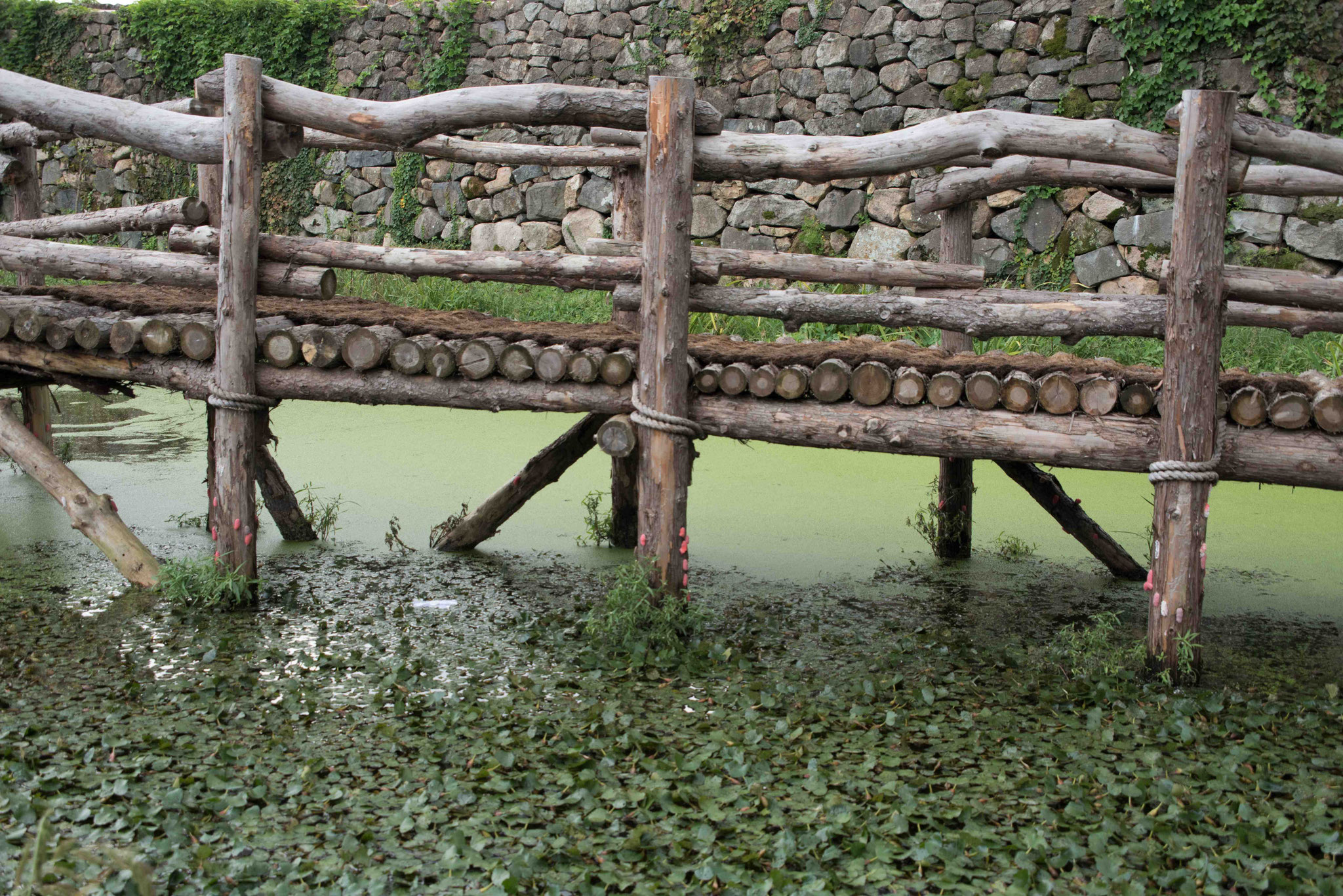 Holzsteg im Seerosenteich