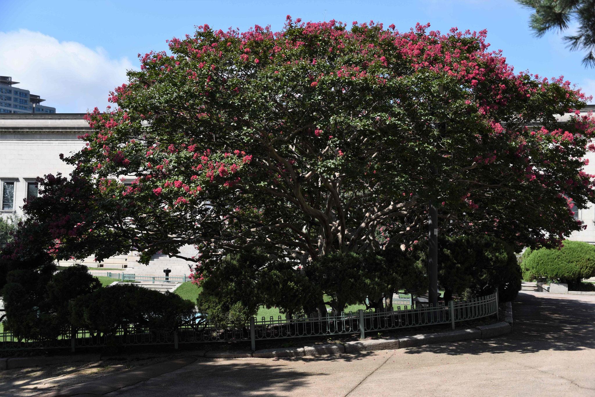 Wunderschöner schattenspendender Baum